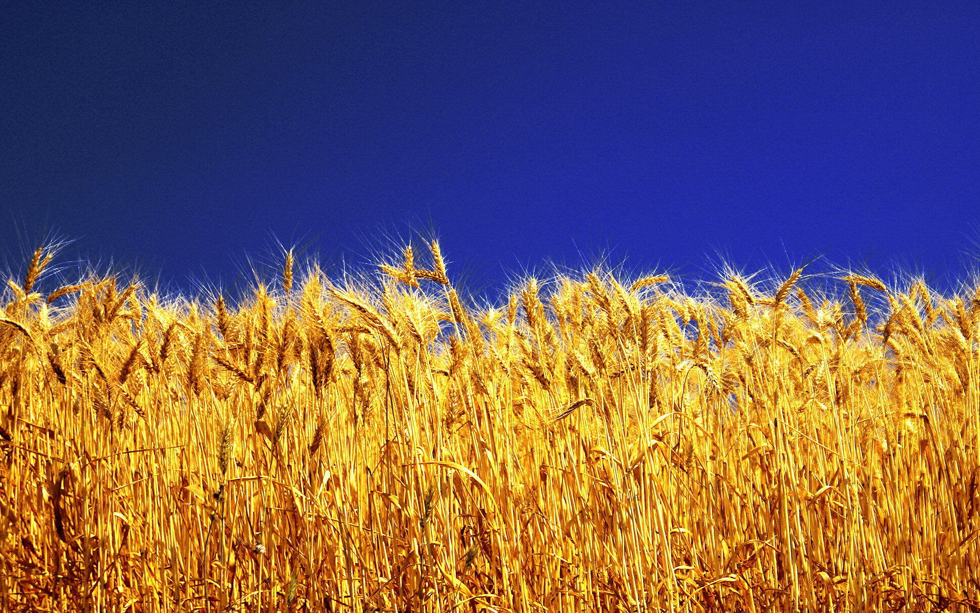 Stunning Barley Wallpaper