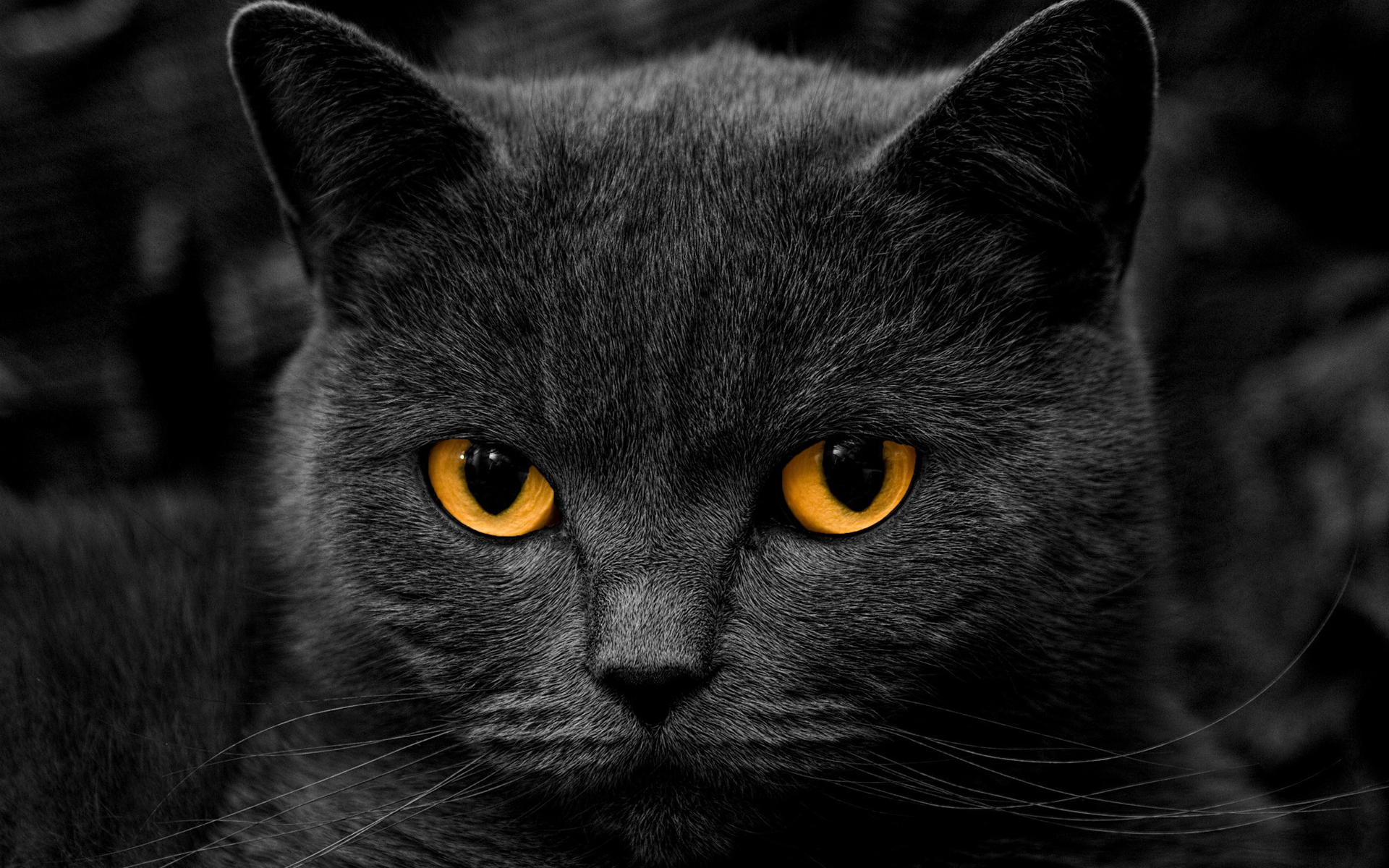 Stunning Black Cat Wallpaper