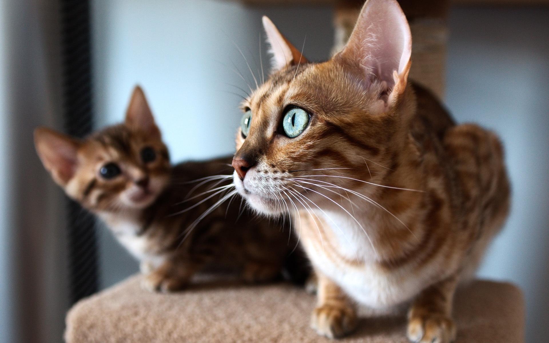 Stunning Cat Close Up Wallpaper