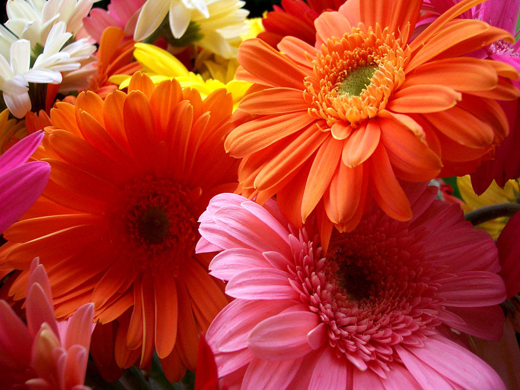 Stunning Colorful Flowers Wallpaper