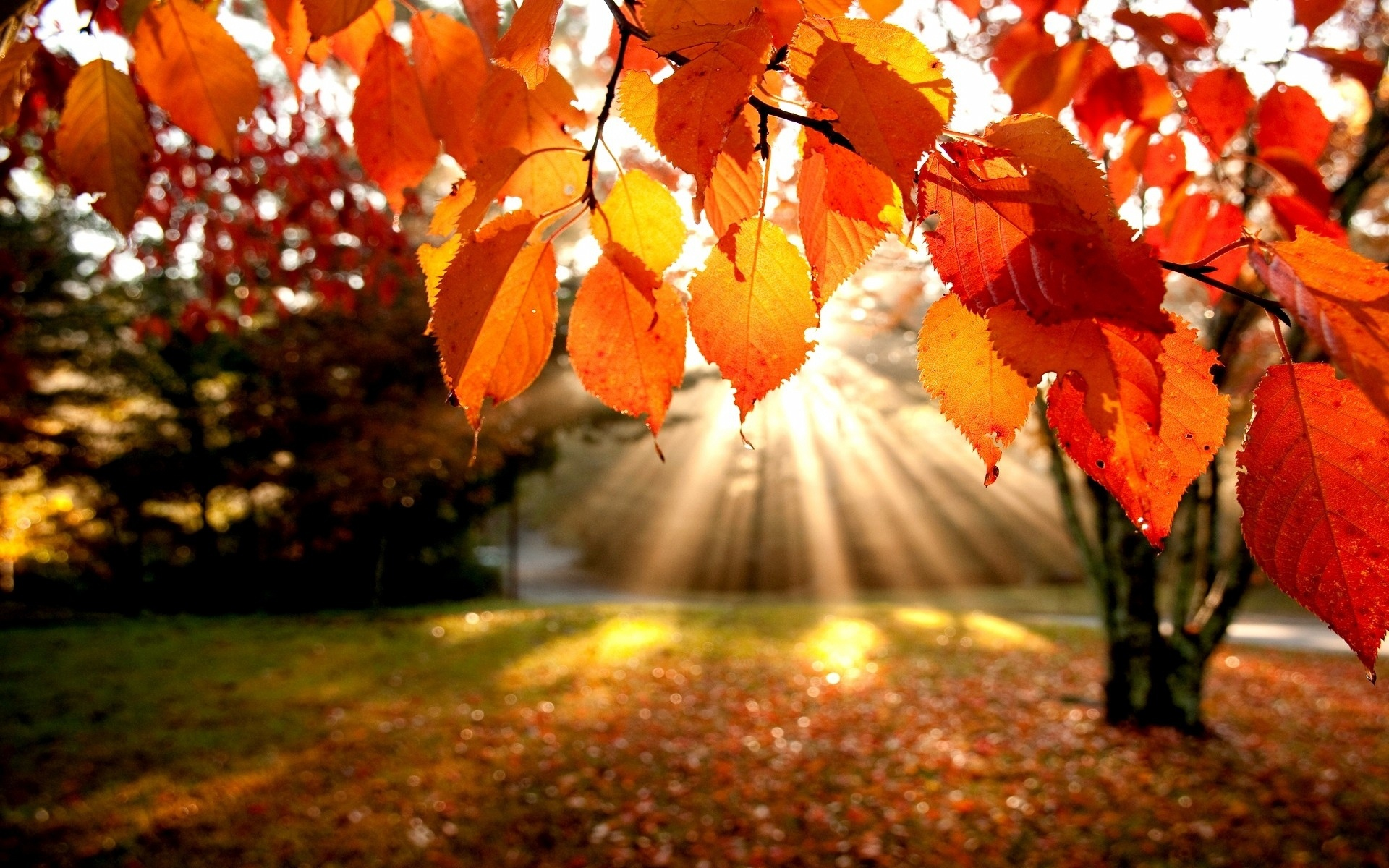 Stunning Fall Trees Wallpaper