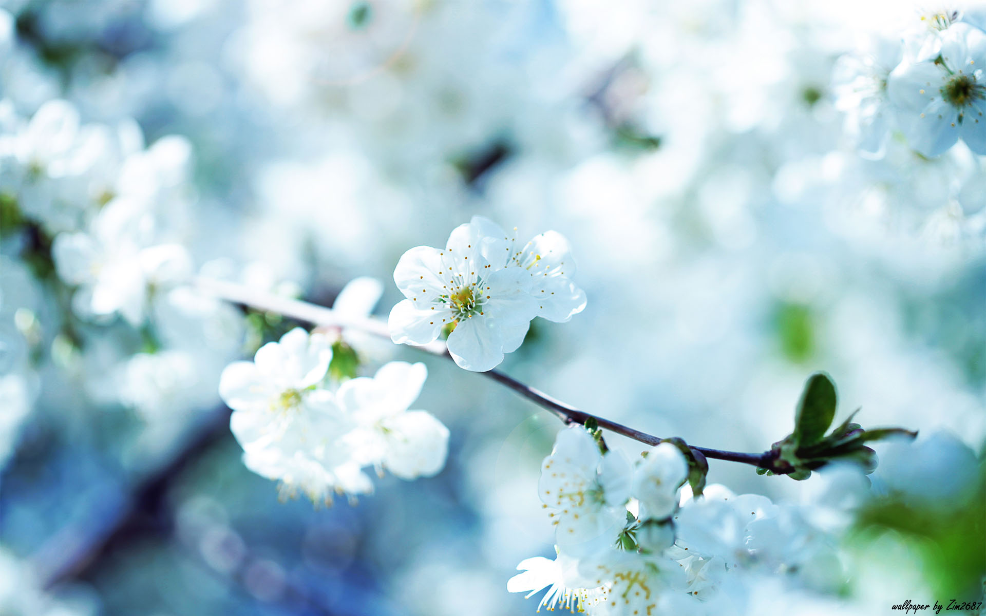 Beautiful Flower Wallpaper 12598