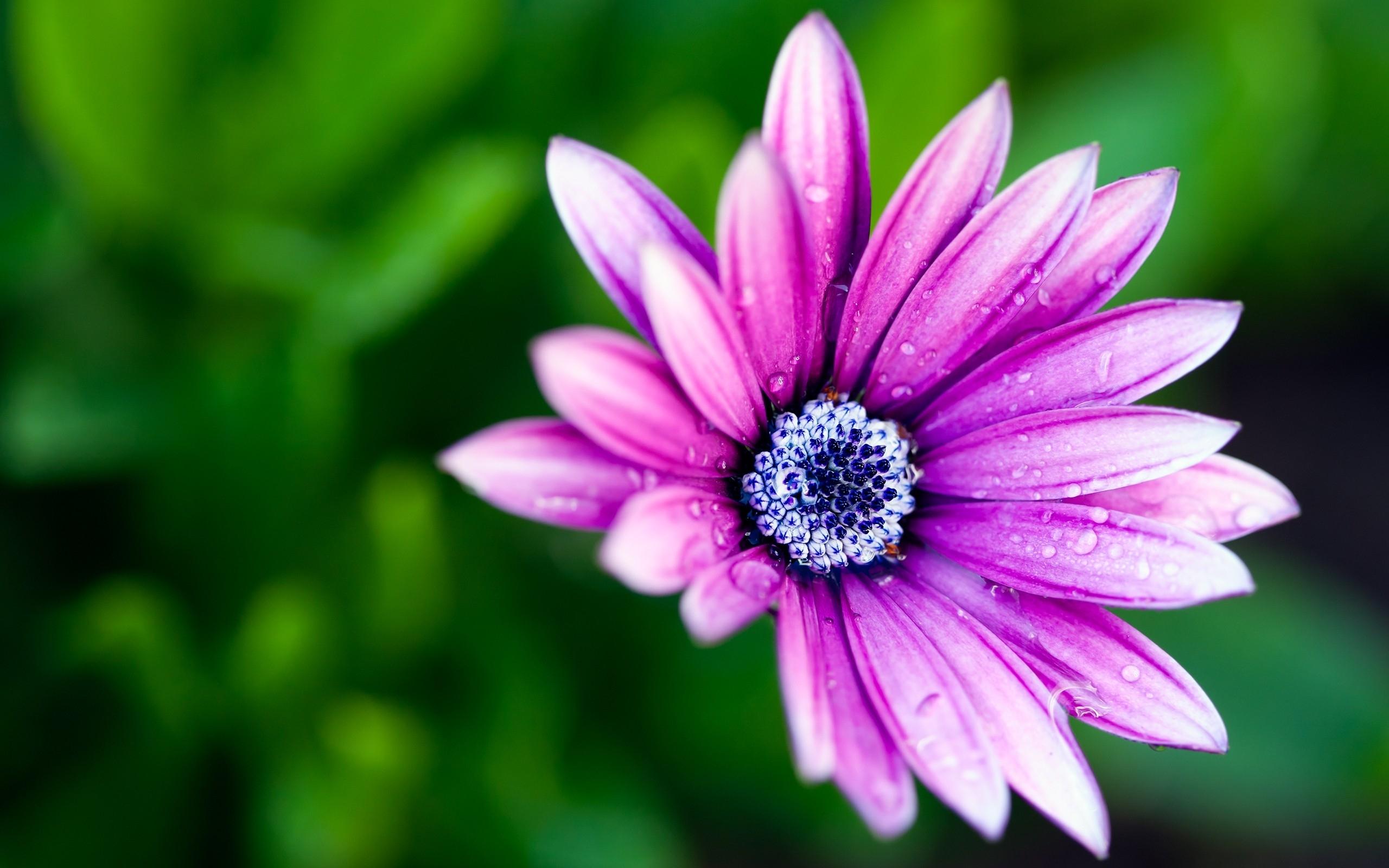 Beautiful Flower Petals
