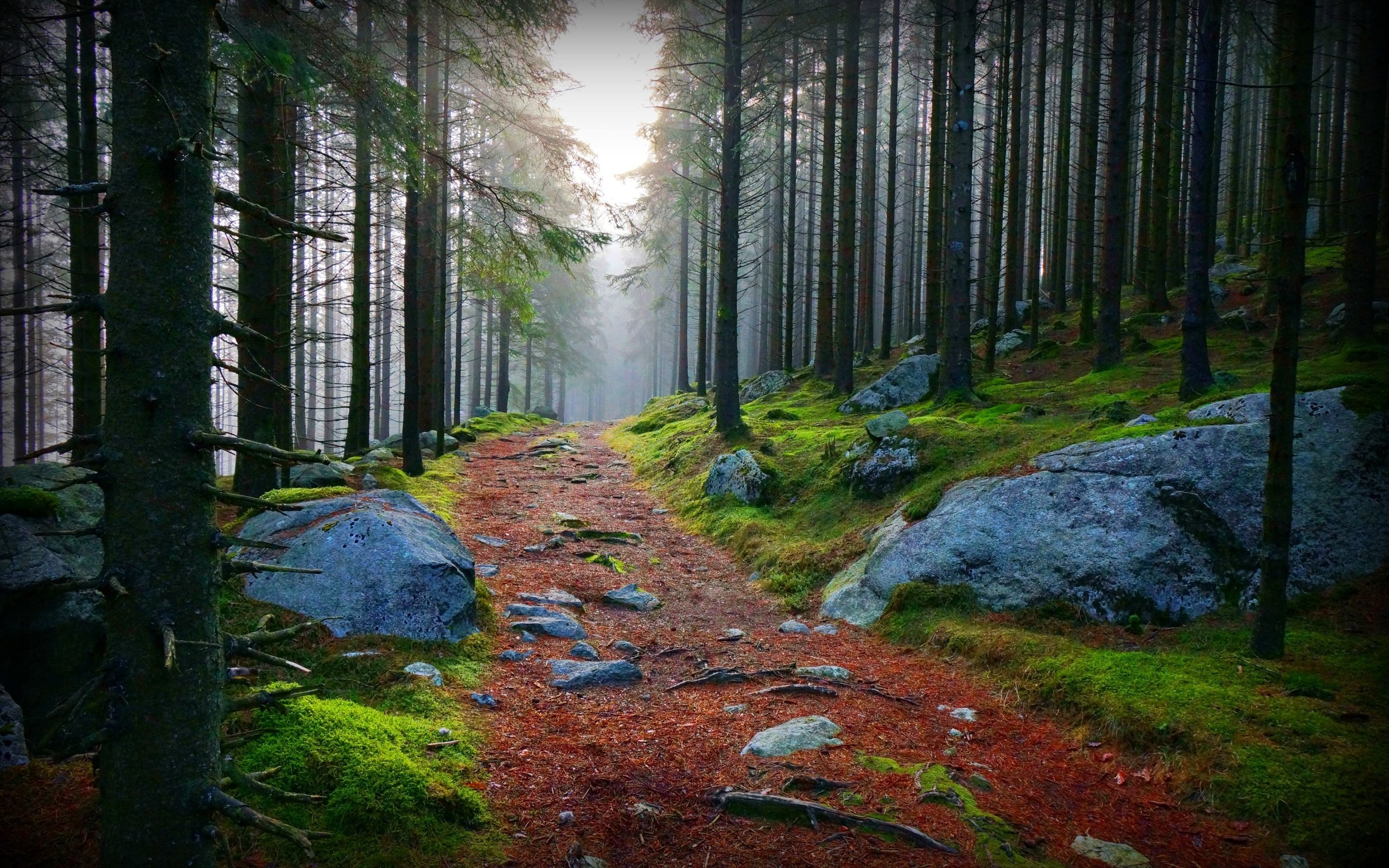 Stunning Forest Path