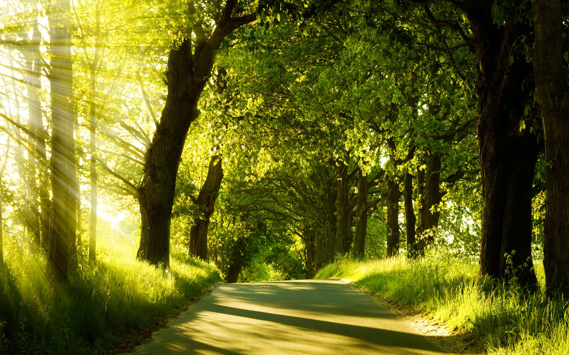 Stunning Forest Road Wallpaper