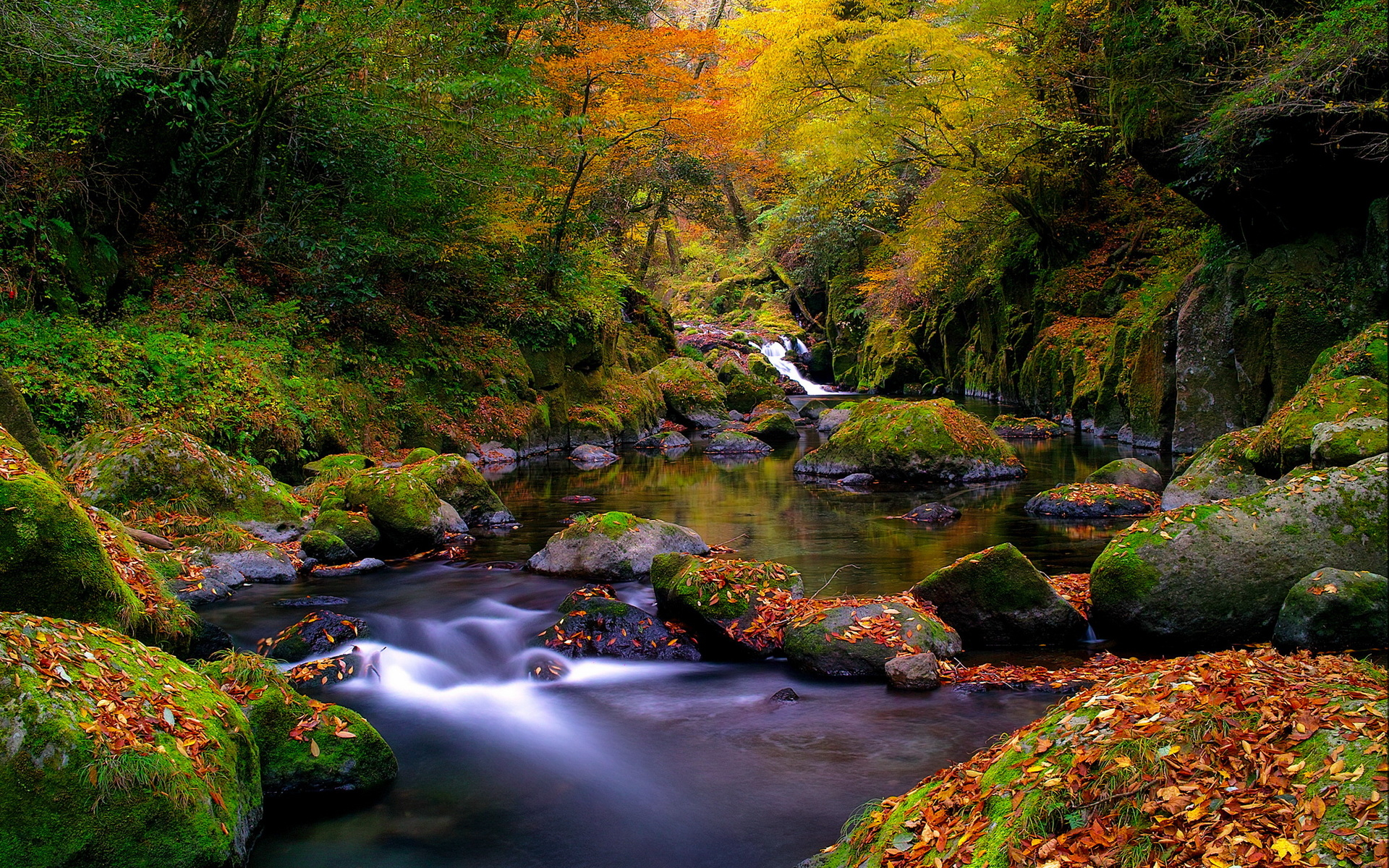 Stunning Forest Stream
