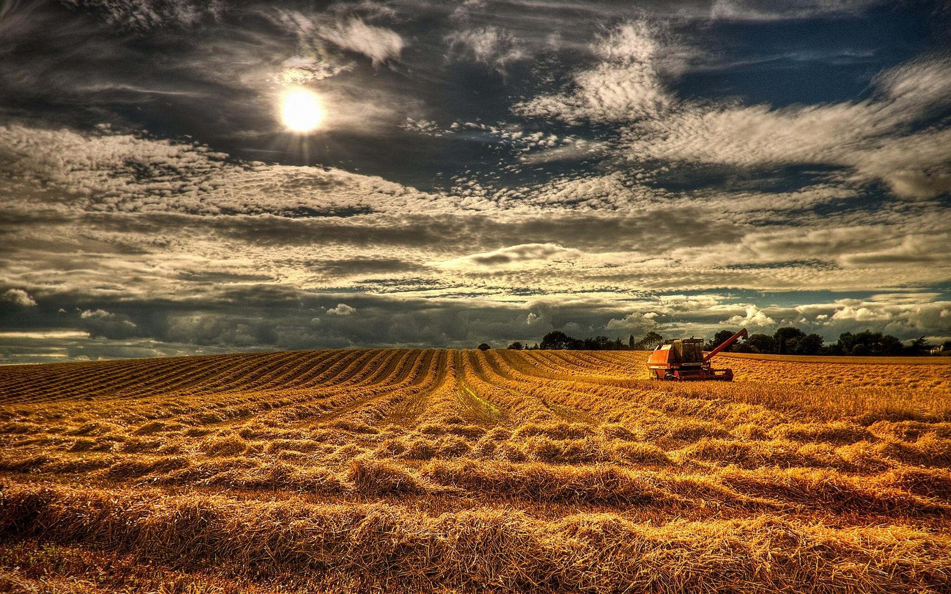 Stunning Harvest Wallpaper