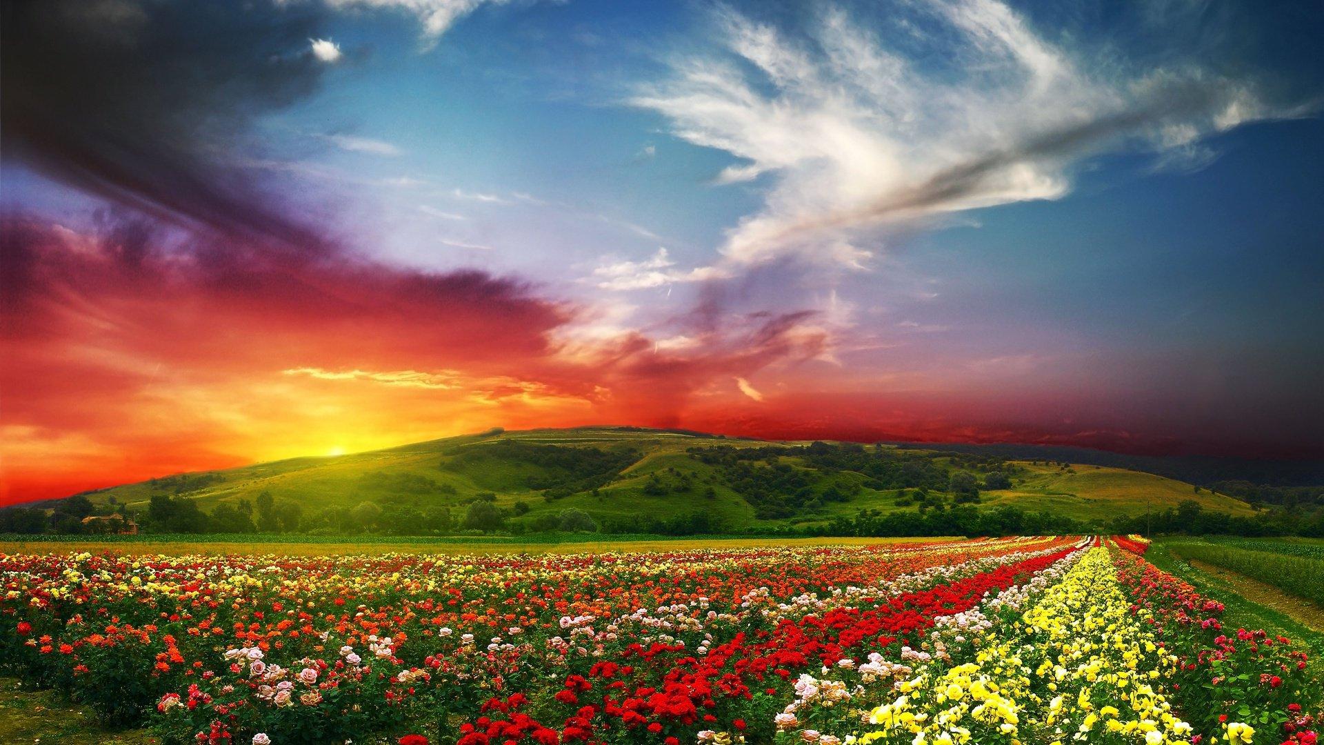 Stunning Landscape