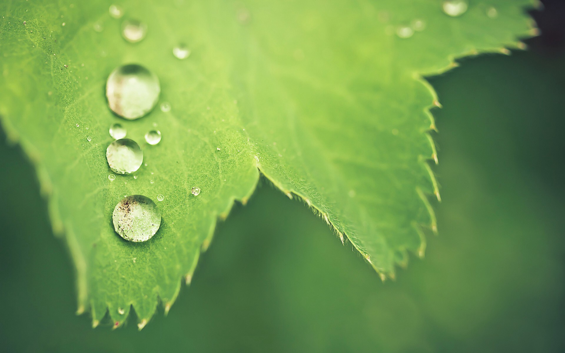 Stunning Leaf Macro Wallpaper