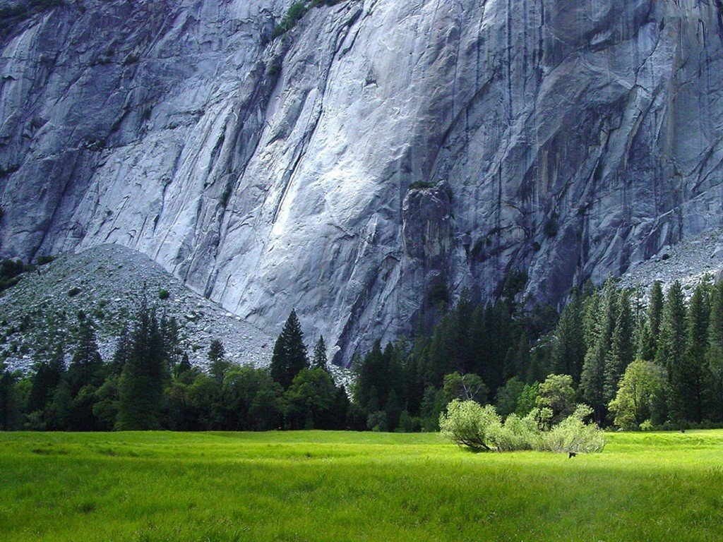 Stunning Meadow Wallpaper 13865