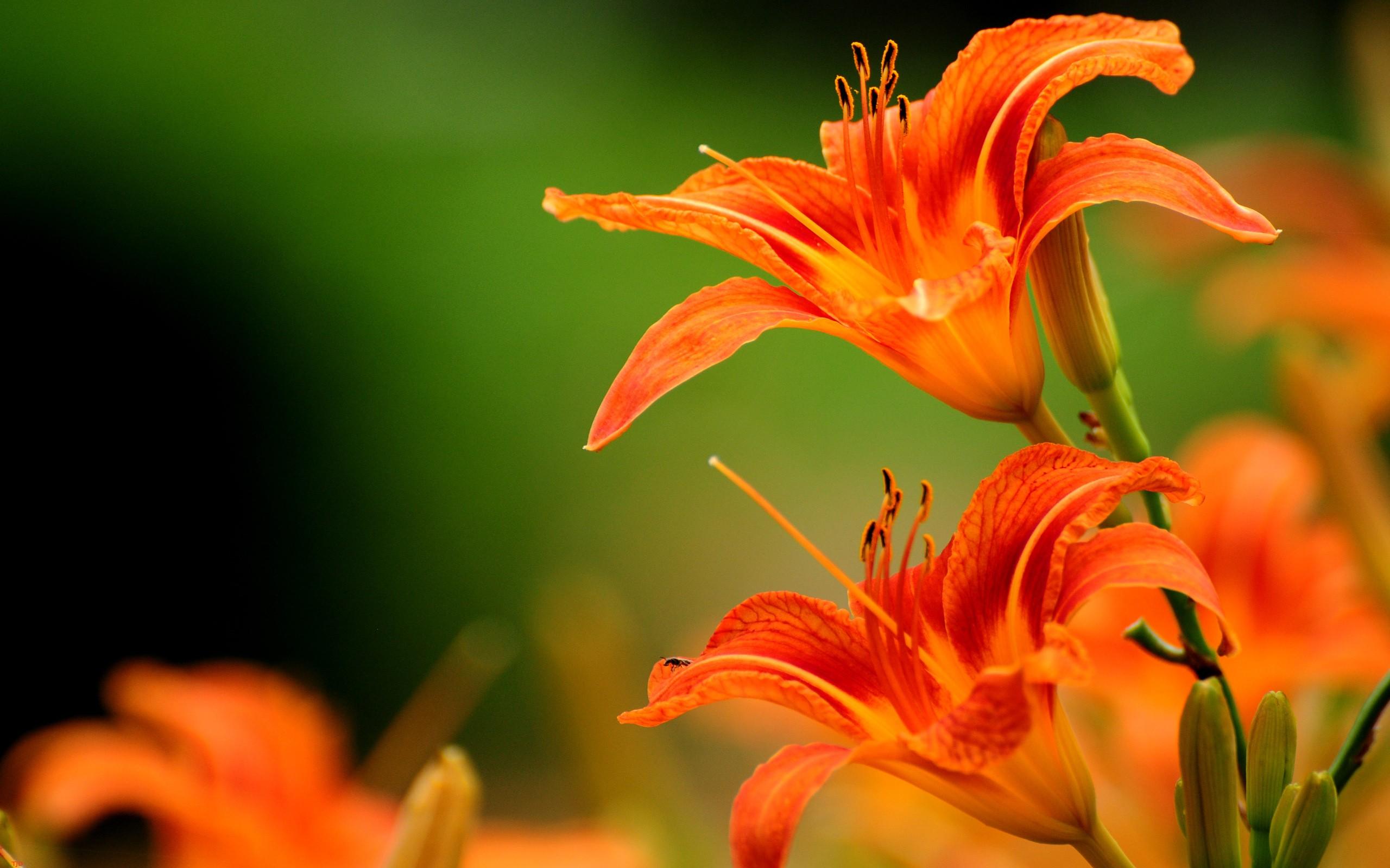 Stunning Orange Flower