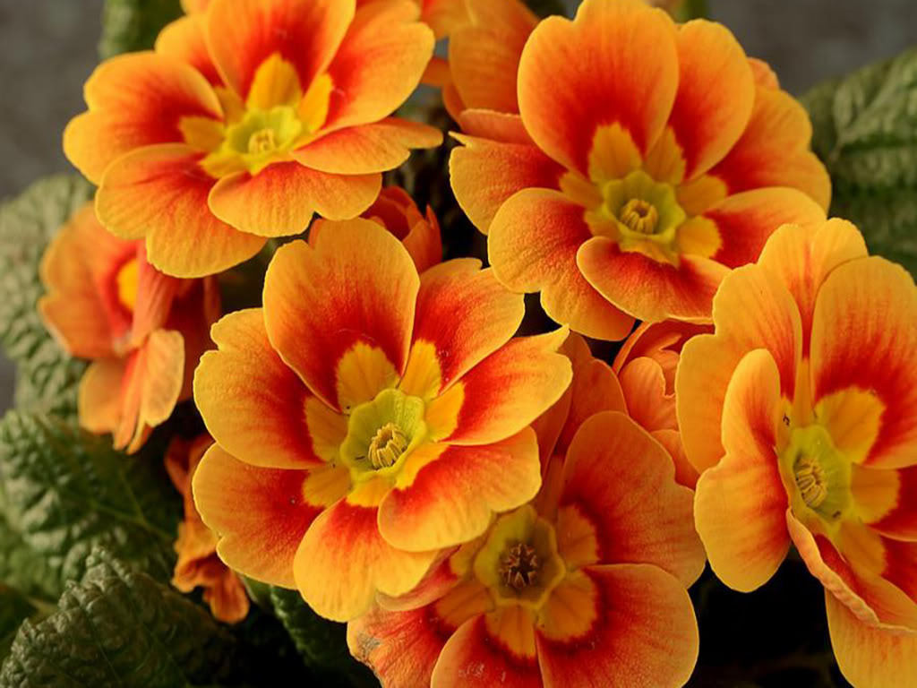 Stunning Orange Flowers