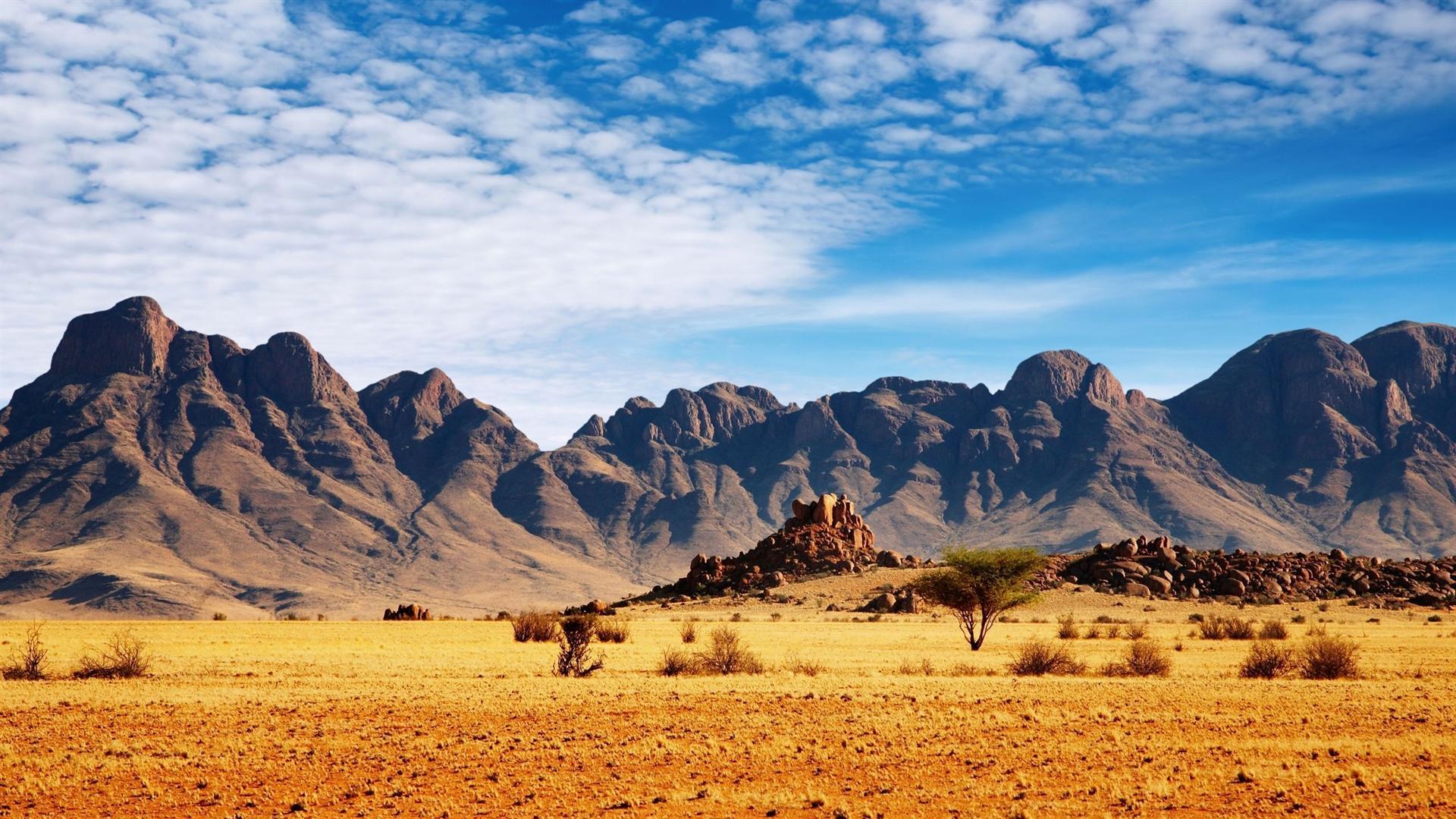 Stunning Safari Wallpaper