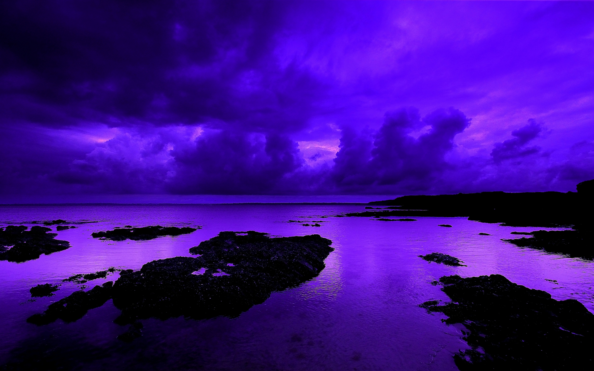 Stunning Violet Wallpaper