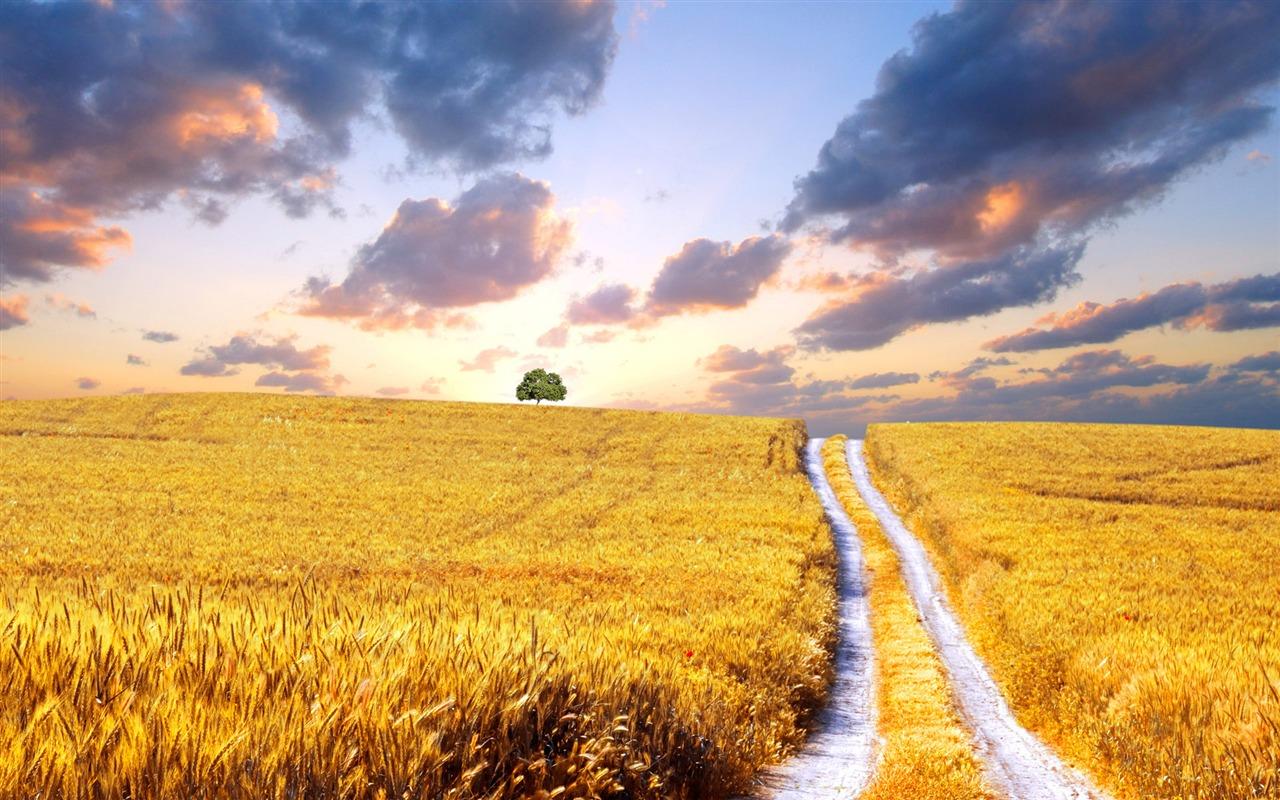 Stunning Wheat Wallpaper