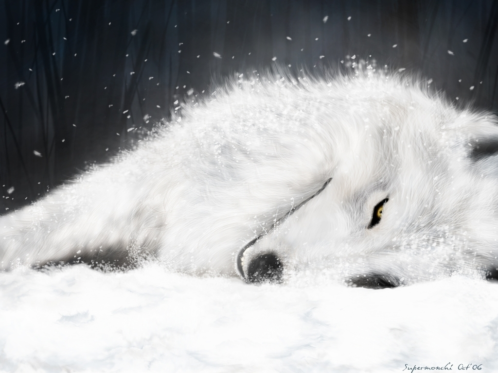 Stunning White Wolf Wallpaper