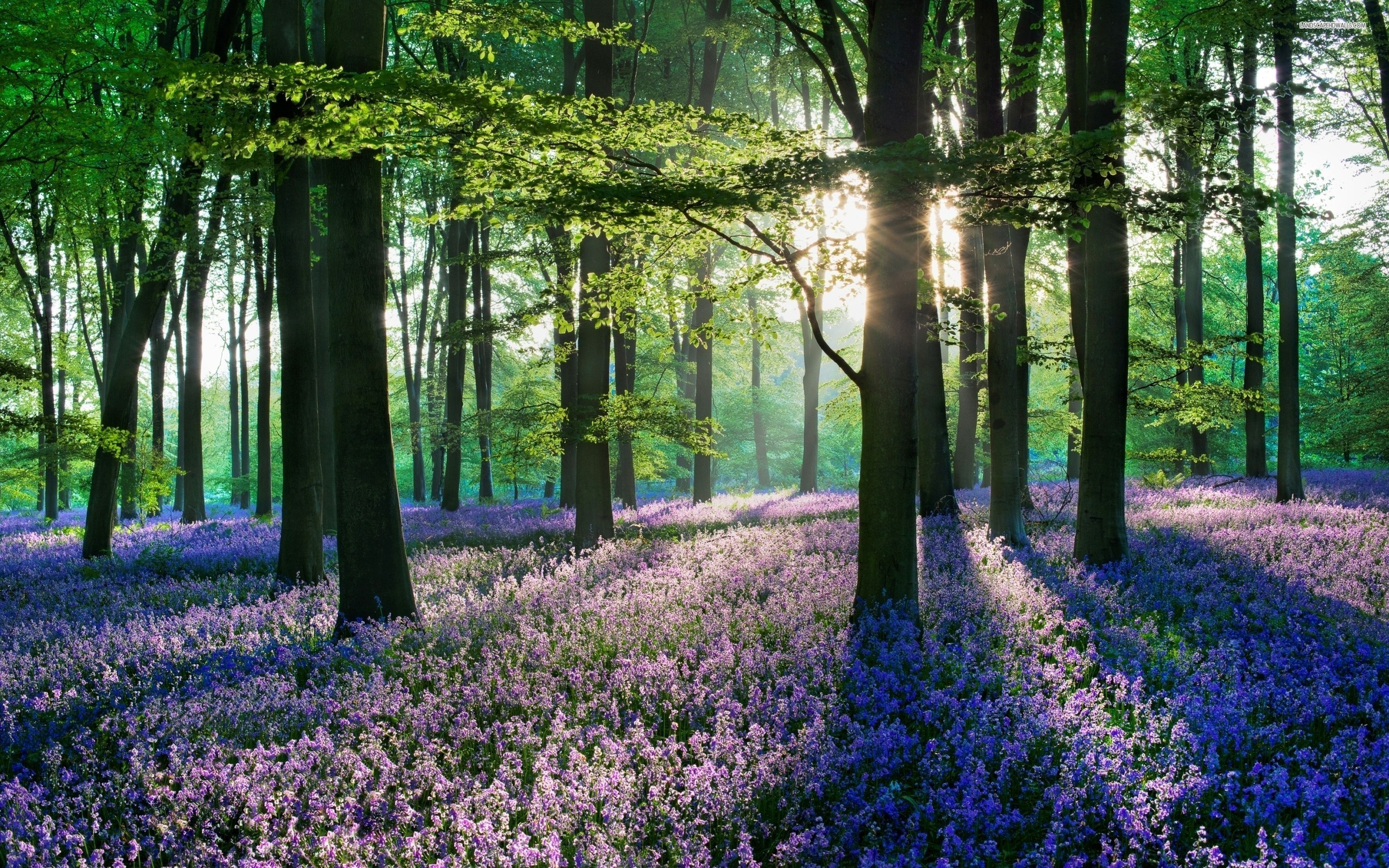 Stunning Woods Wallpaper