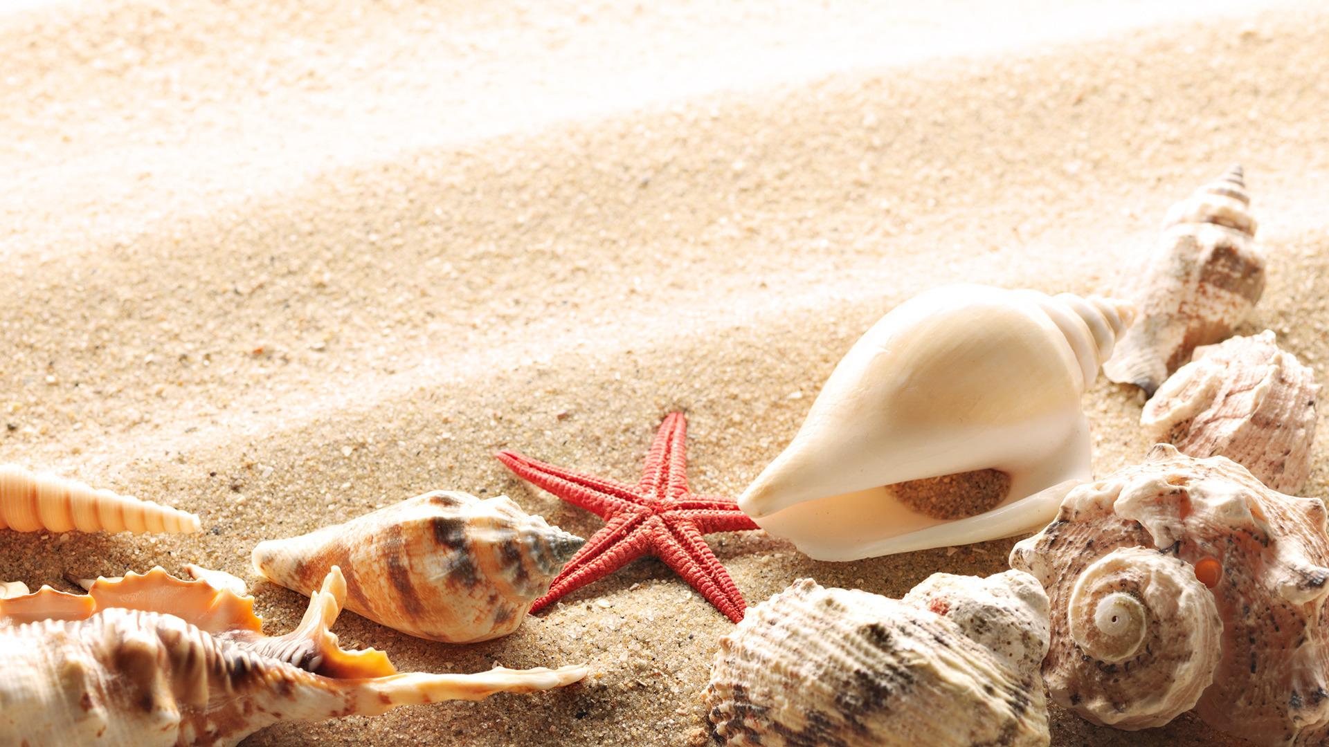 Summer beach shells