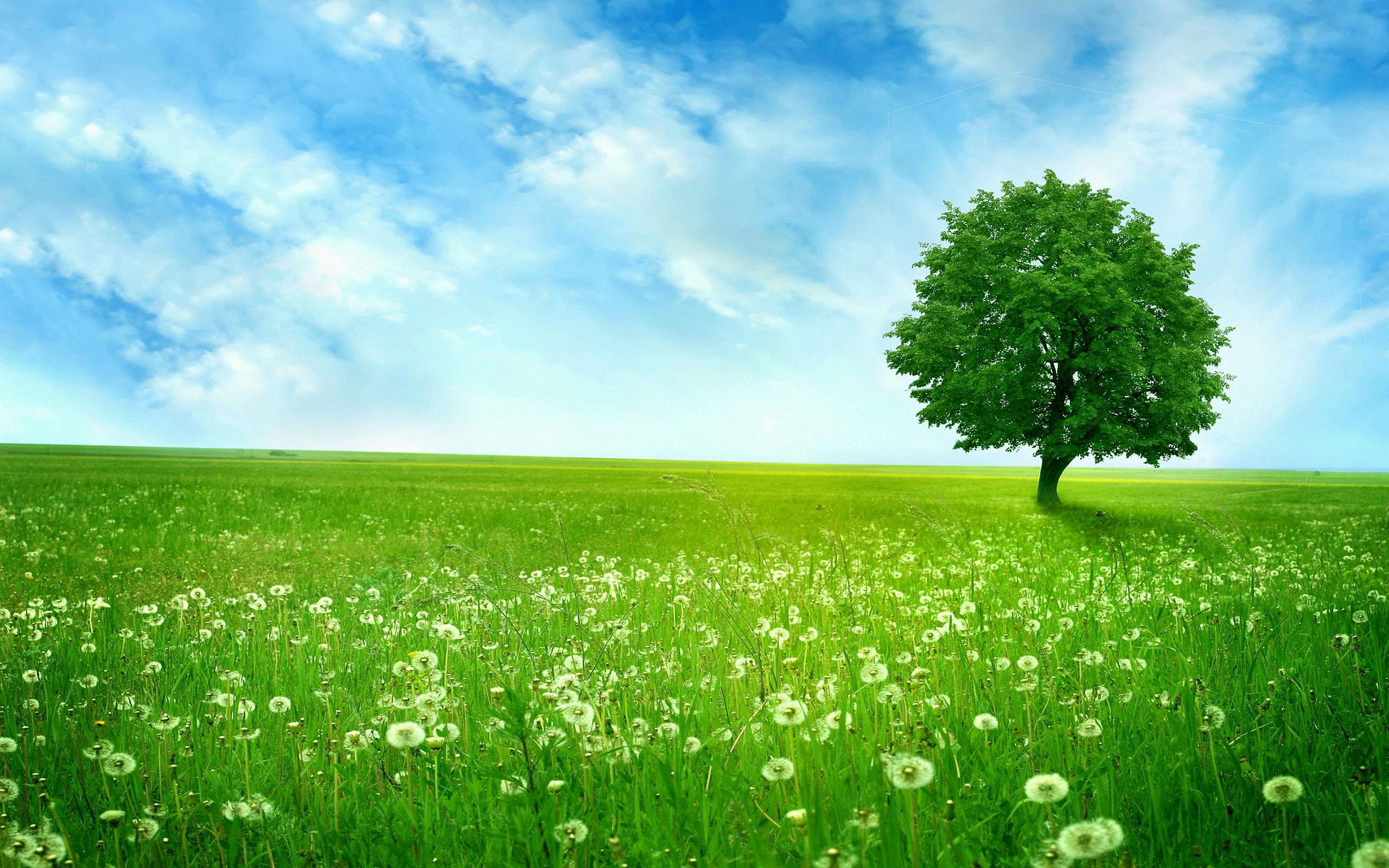 Summer dandelion landscape
