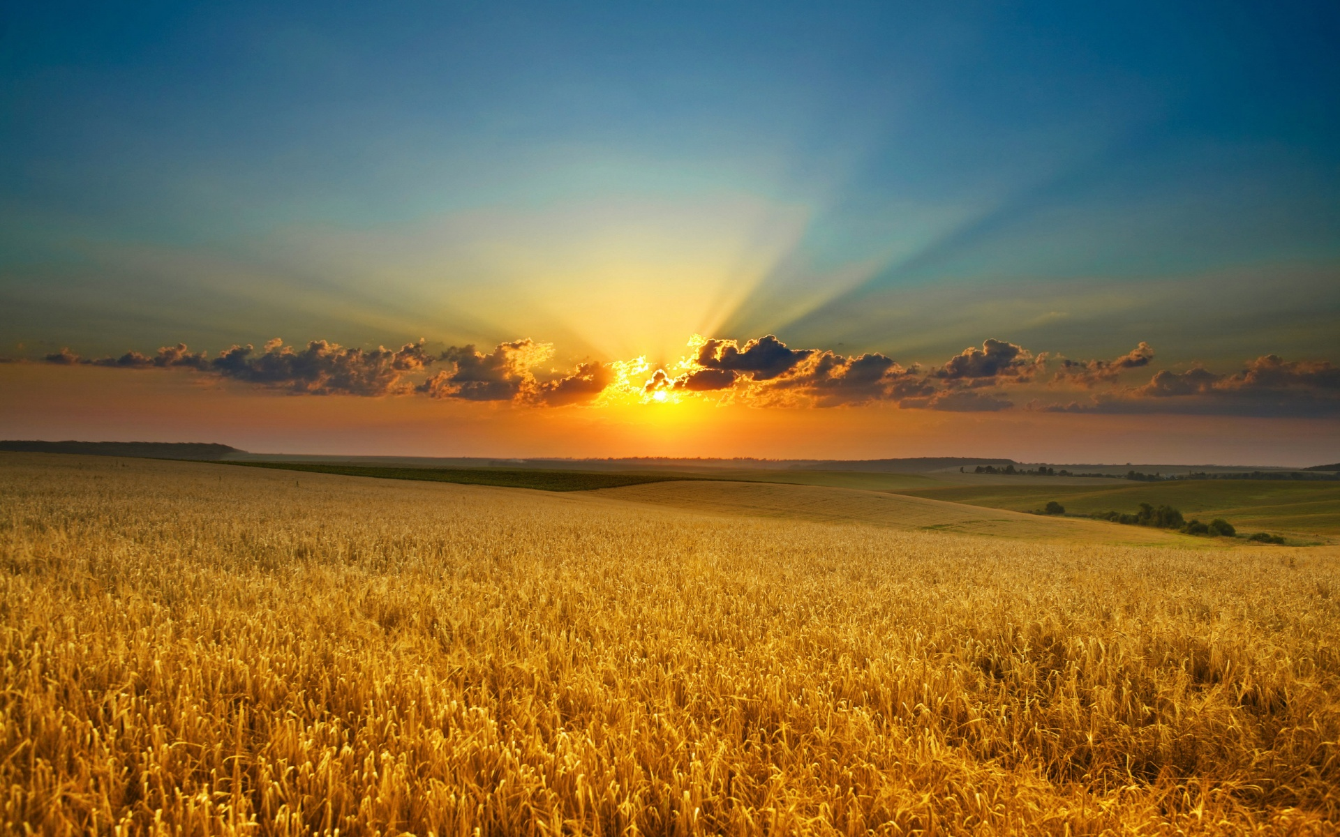 Description: The Wallpaper above is Summer evening Cornfield Wallpaper in Resolution 1920x1200. Choose your Resolution and Download Summer evening Cornfield ...