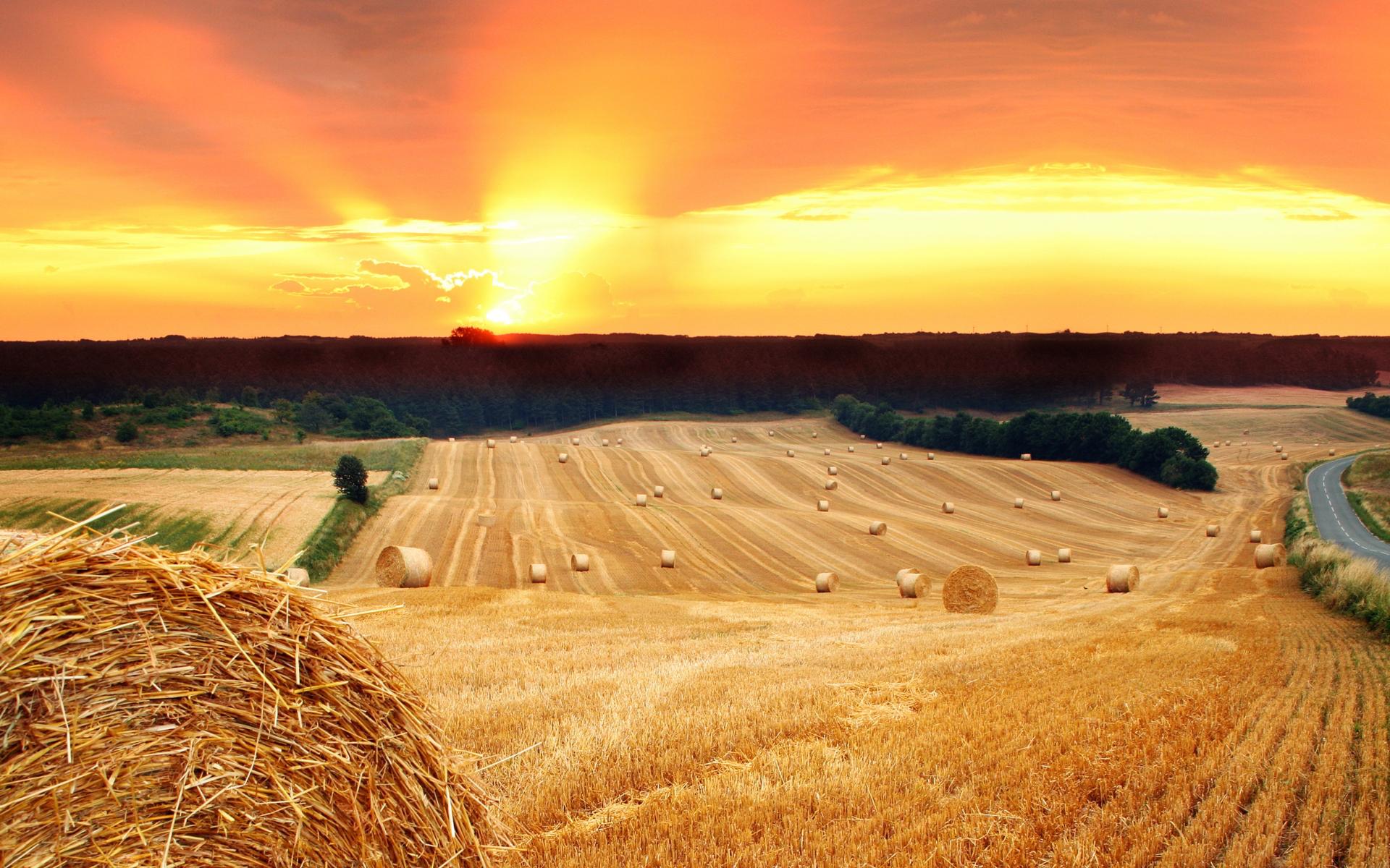Summer field hay sunset