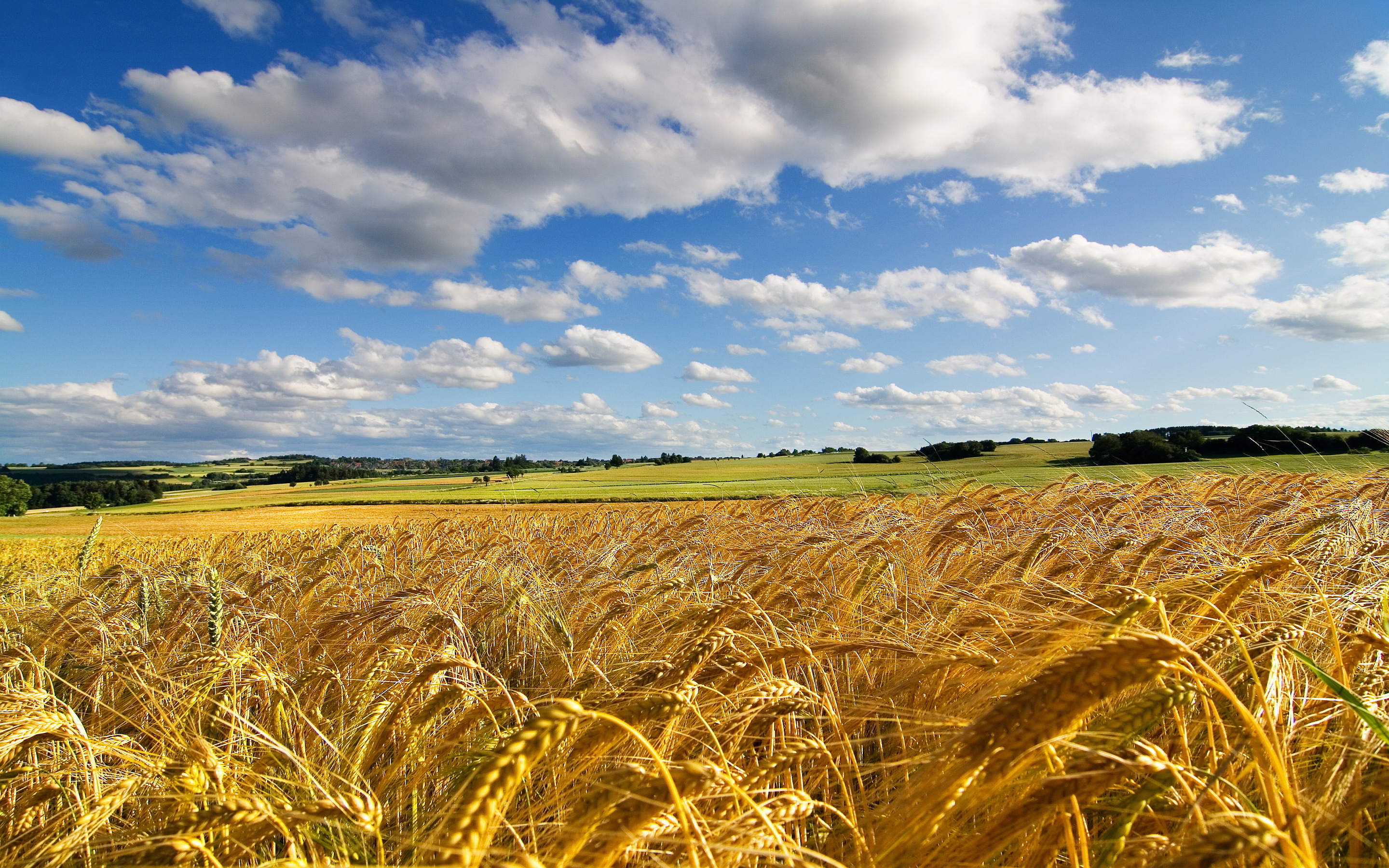 Summer field hd Wallpapers Pictures Photos Images. «