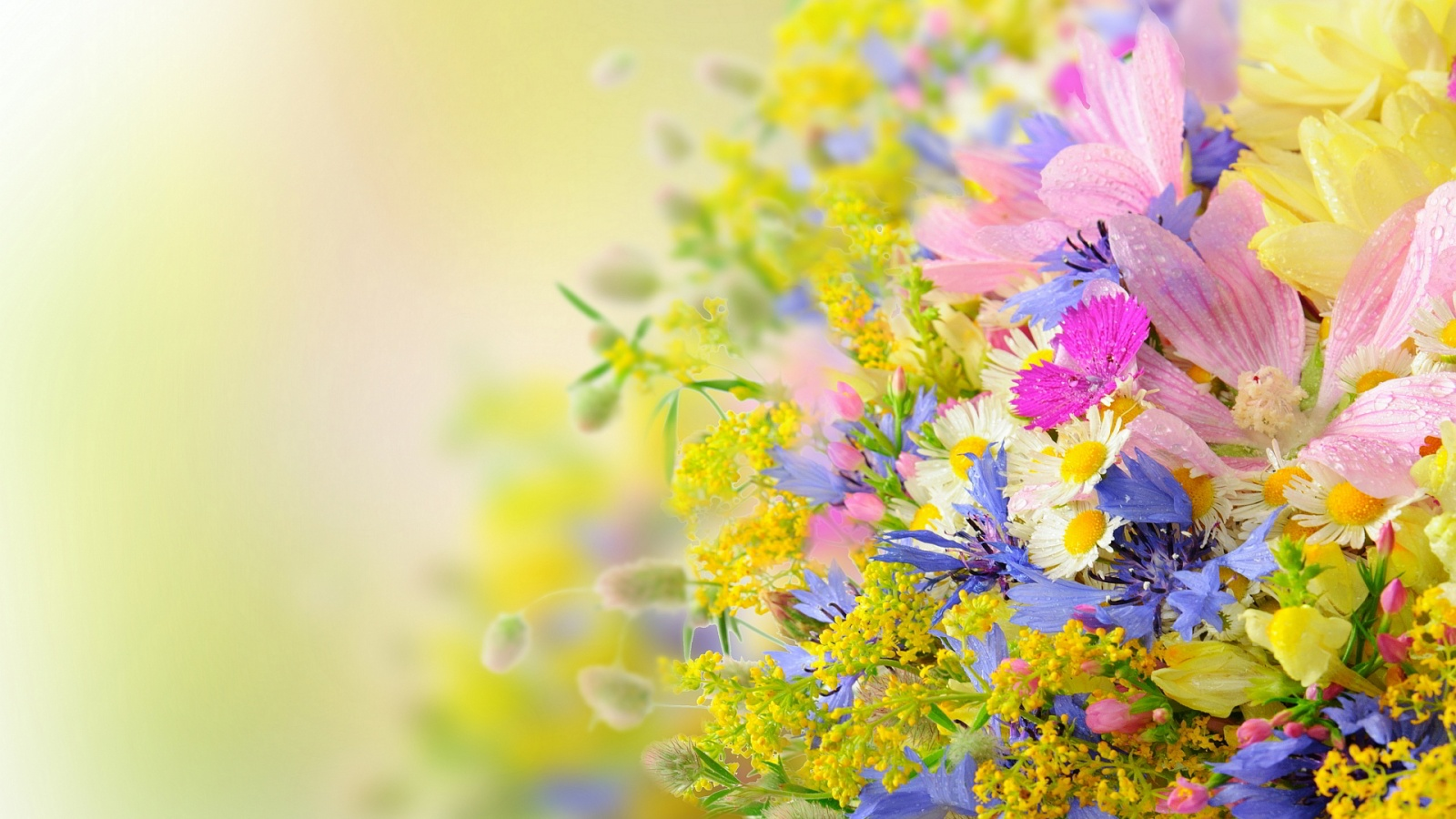 Summer Flowers Wallpaper 1600x900 66724
