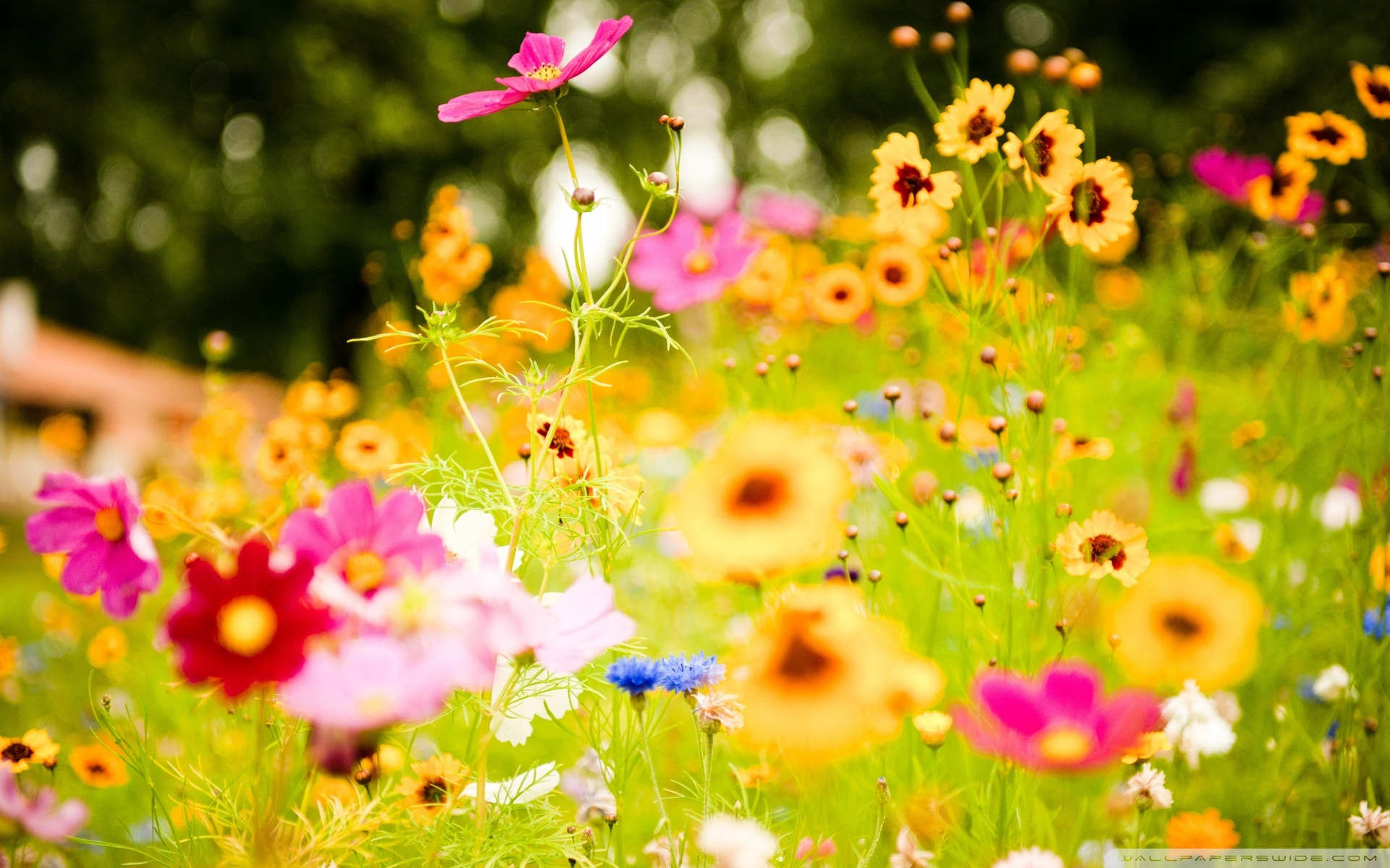 HD Quality Summer Flowers Desktop Background 2 Wallpaper - SiWallpaper 5501
