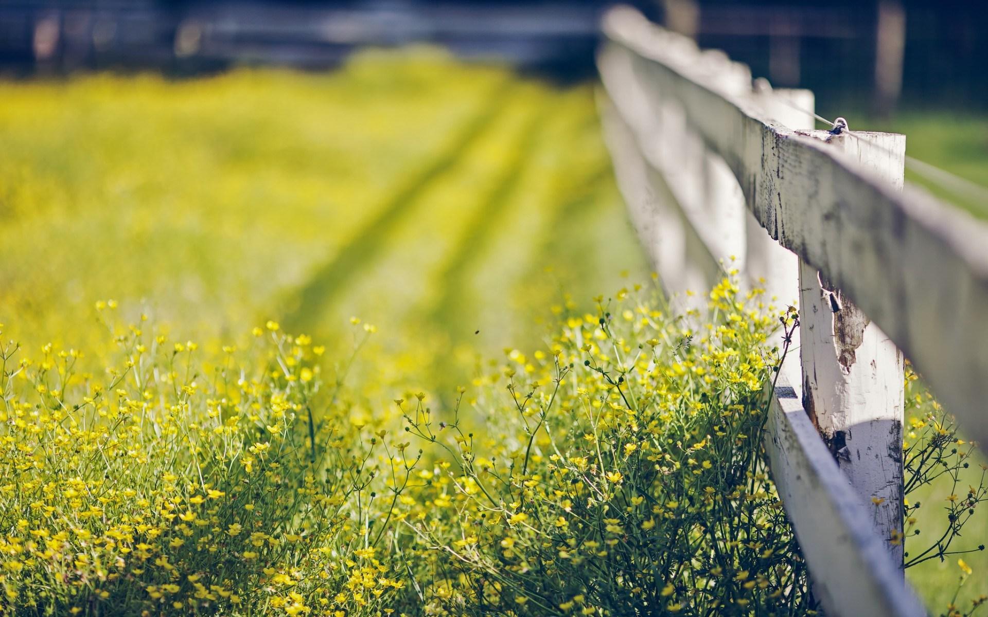Macro Flowers Summer Fence Nature
