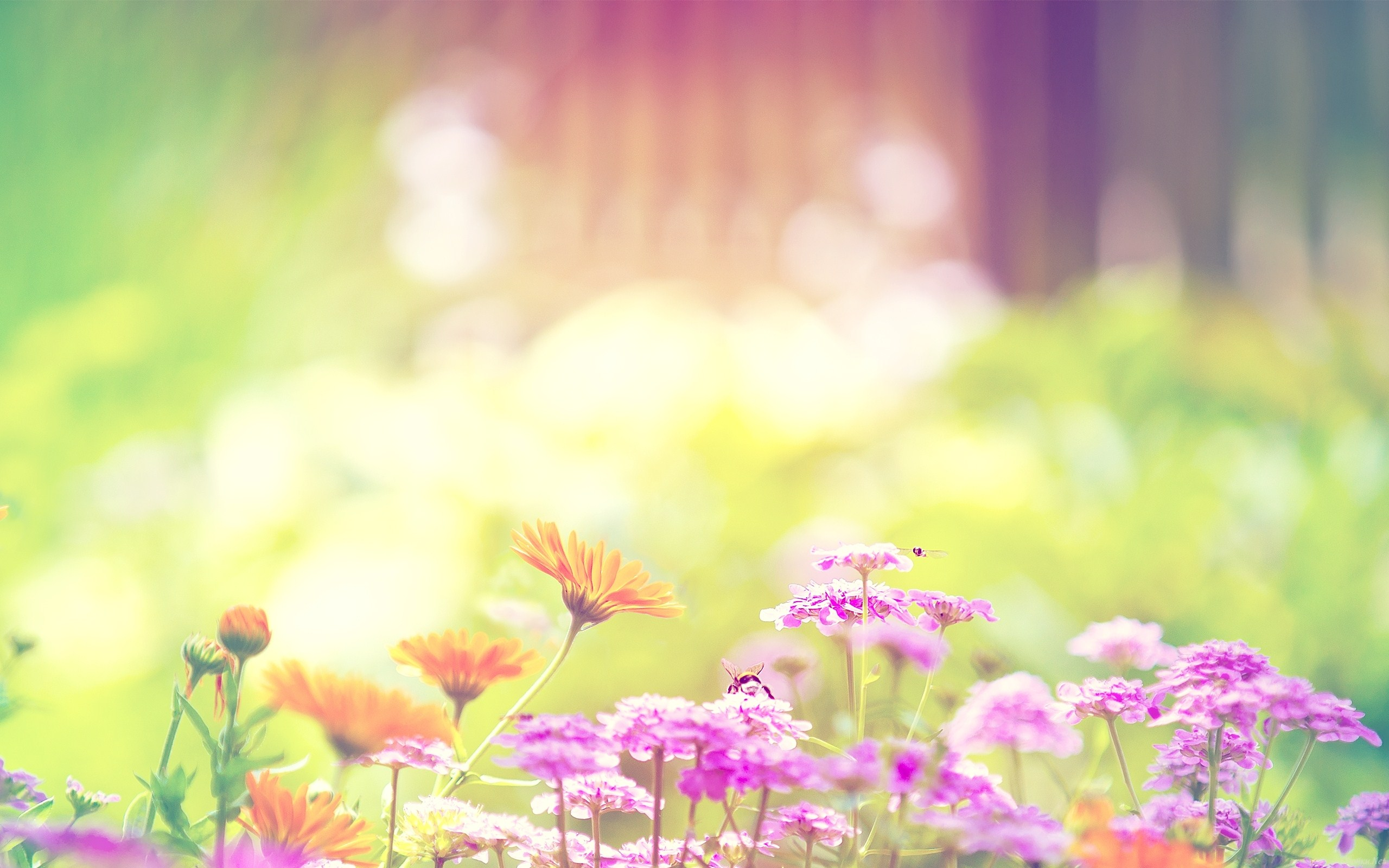 Colorful Summer Flowers Wallpapers