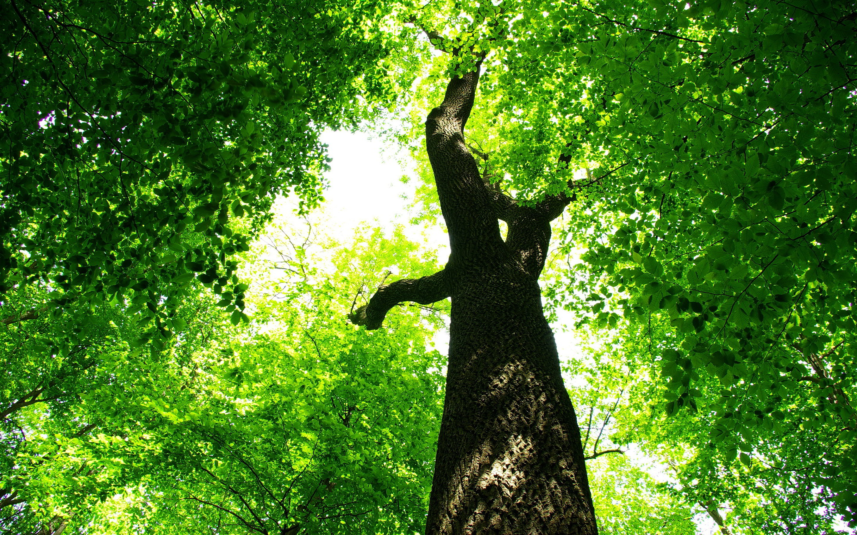 Summer green tree foliage