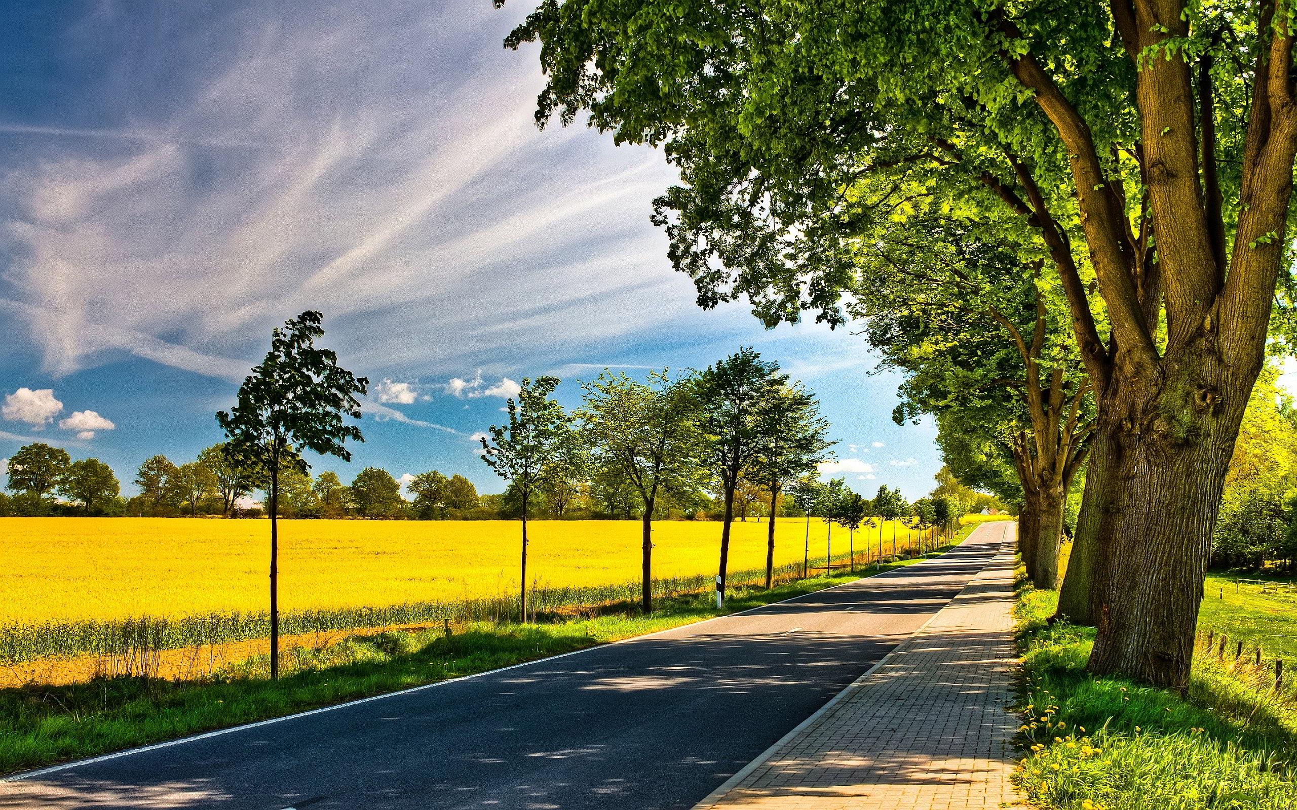 Summer Road Fields
