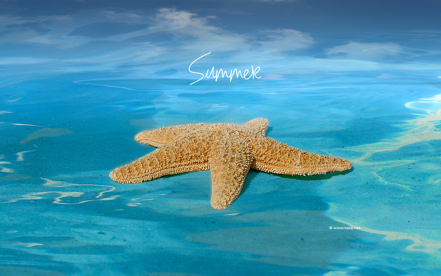 Summer Screensavers Wallpaper