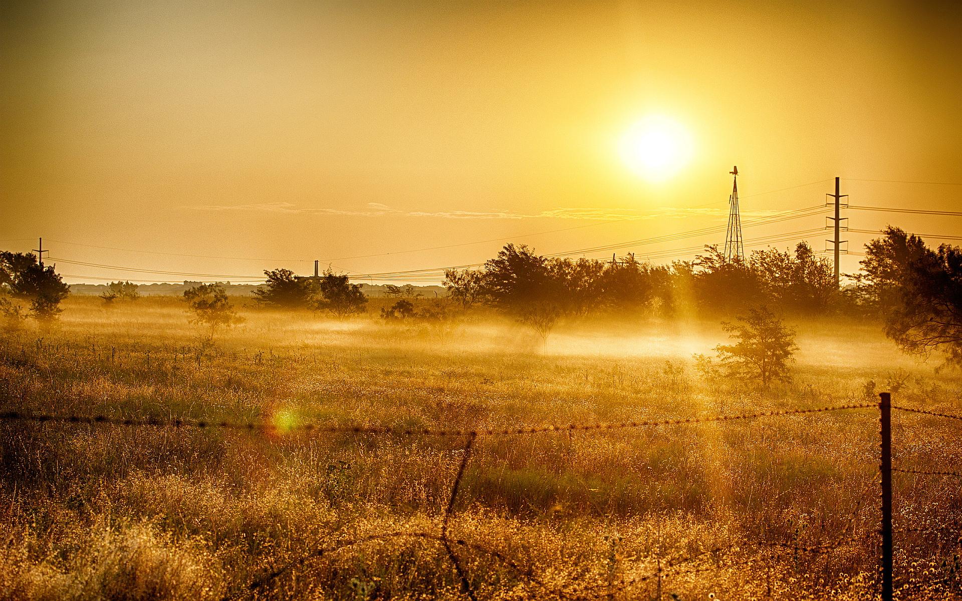 Summer sun field