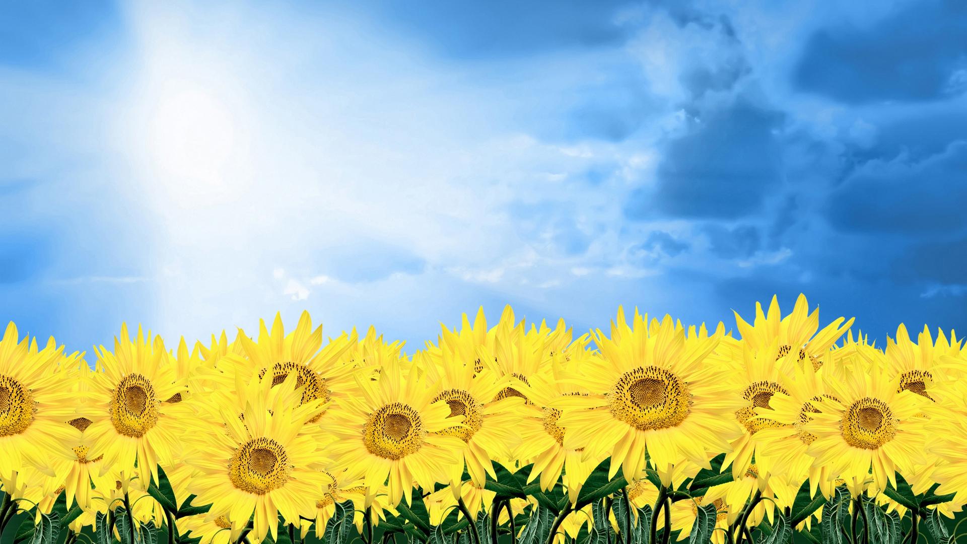 Download Sunflower Field, summer, mushrooms, sunflowers, 1920x1080 wallpaper ...