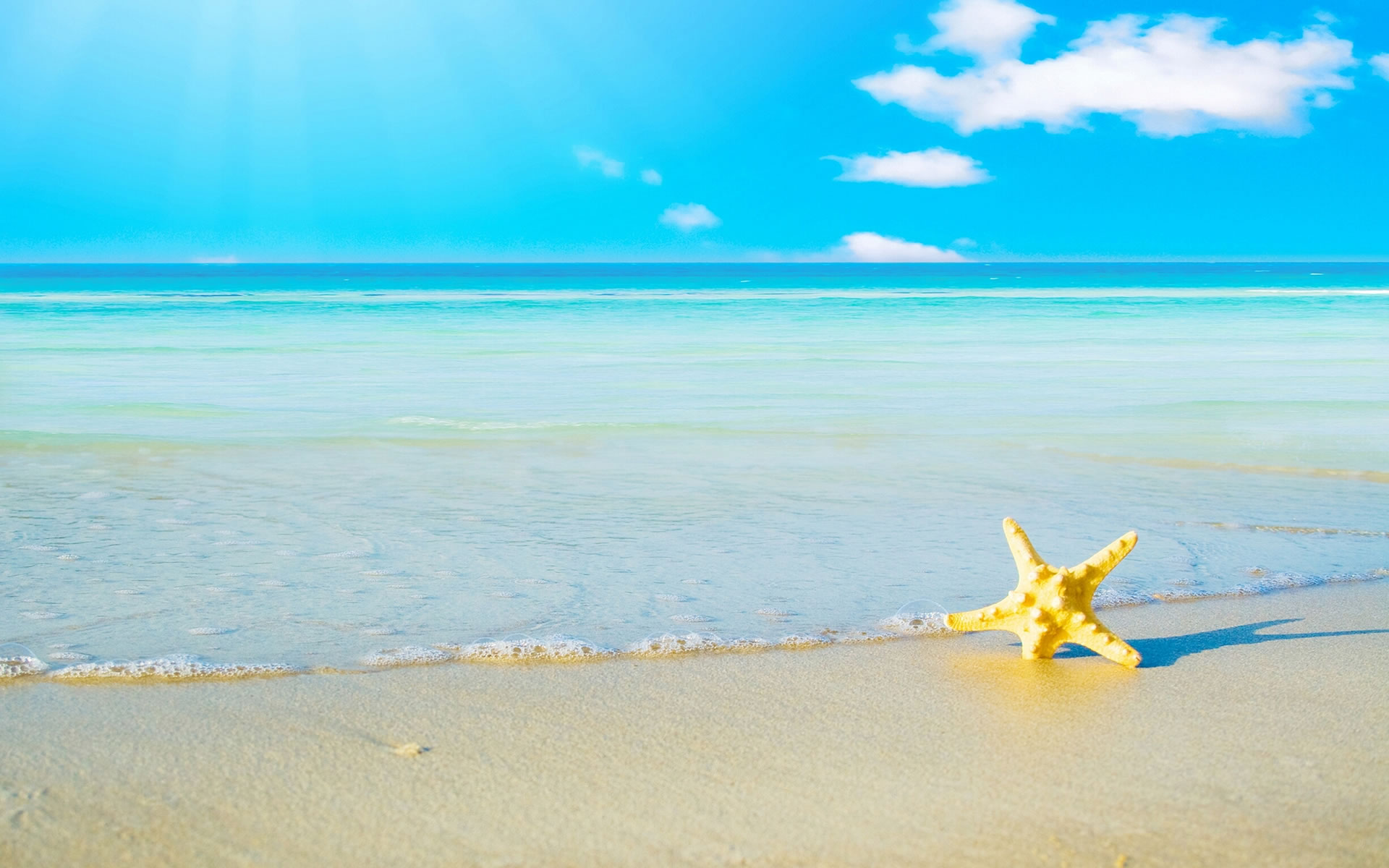 Starfish Summer Wallpaper