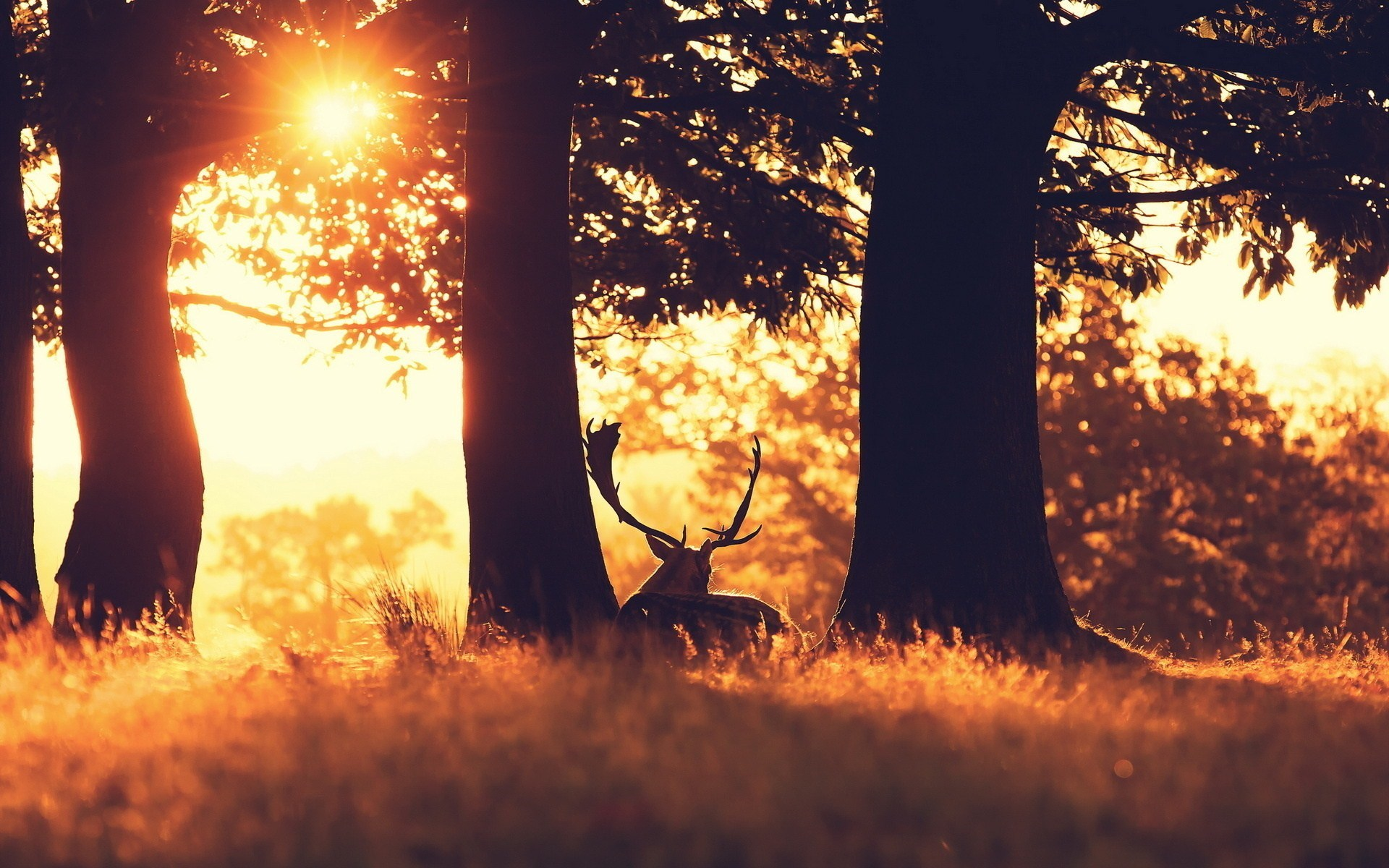 Sun Forest Animal Deer Photo