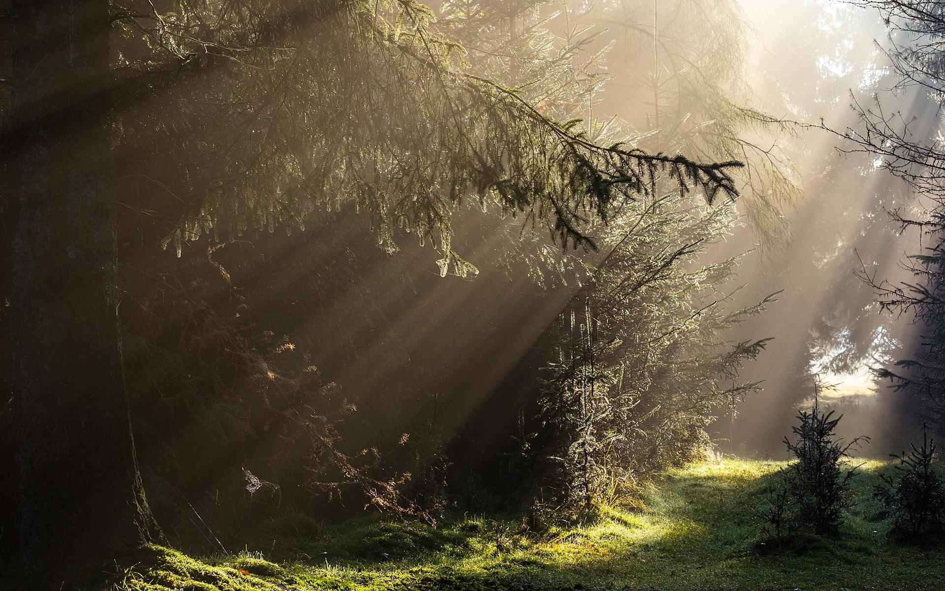 Sunbeam Landscape