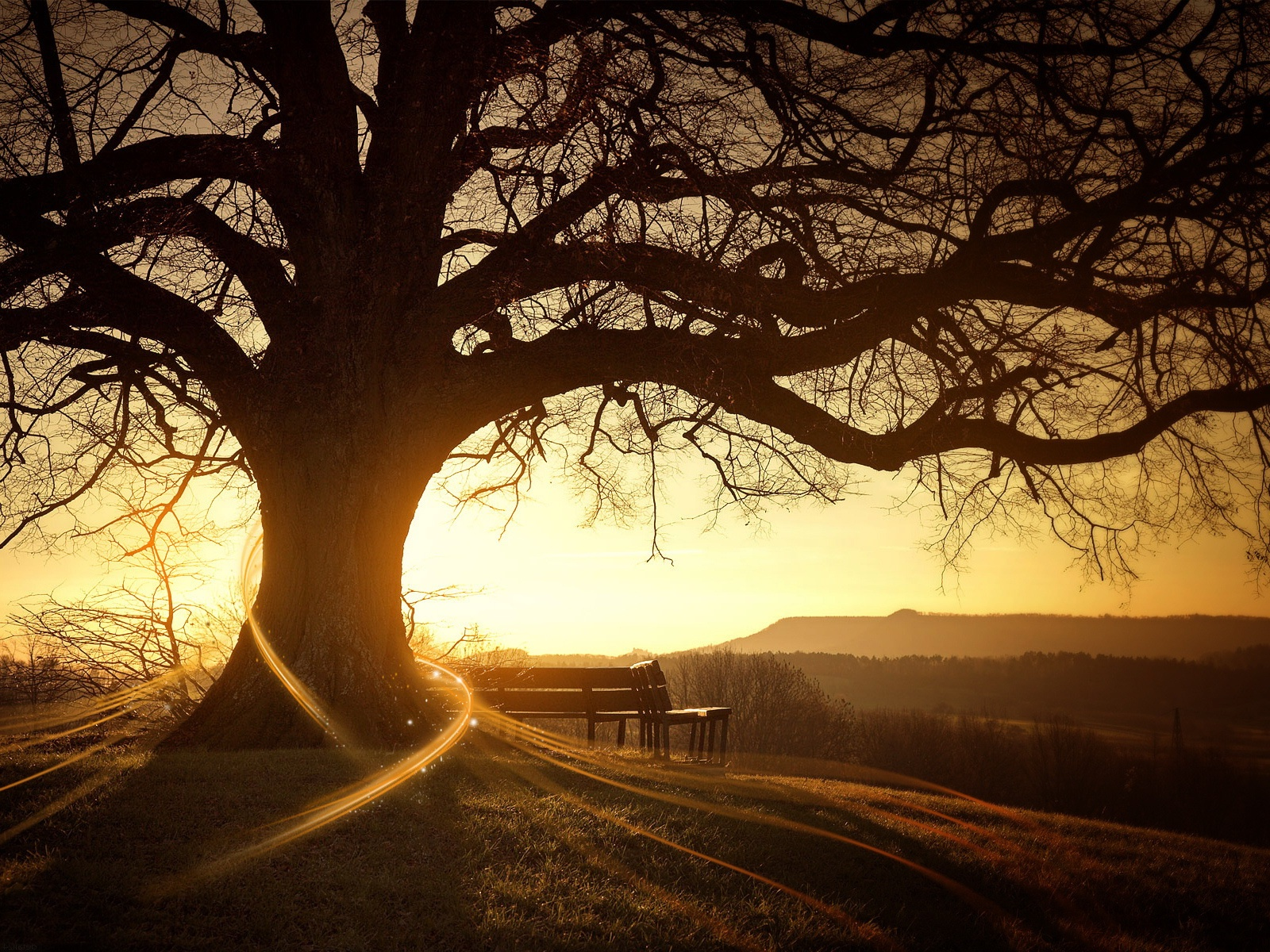 Big Tree with Sunset Landscape View wallpaper