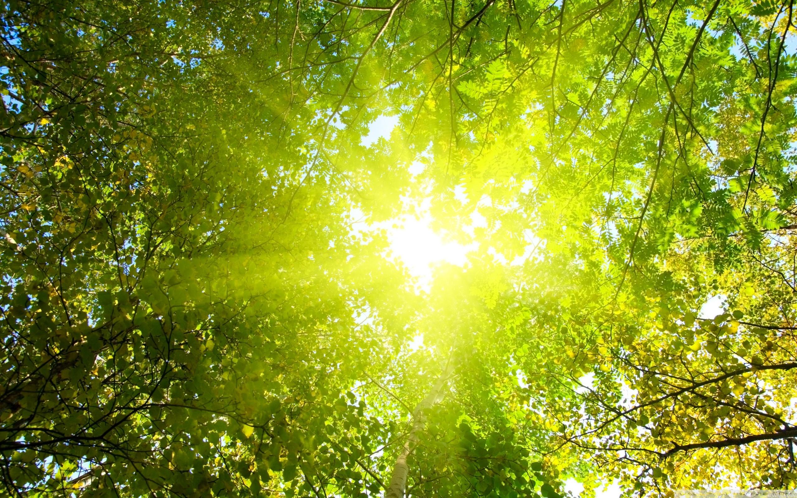 ... Sunlight Wallpaper; Sunlight Wallpaper
