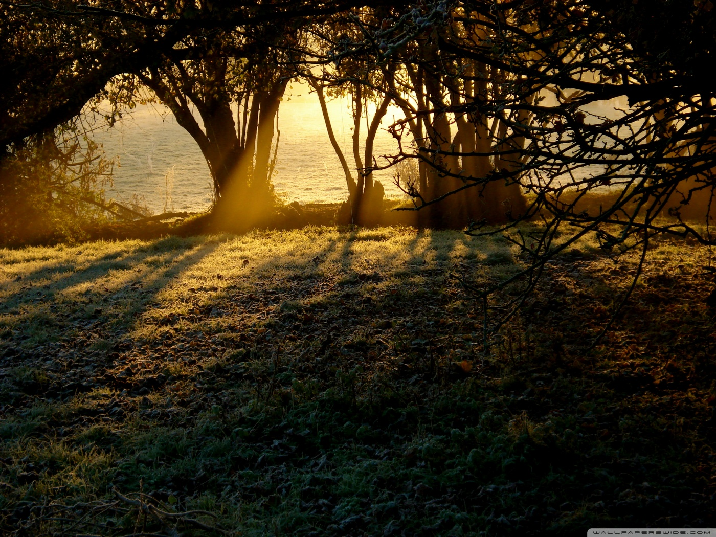Sunlight Wallpaper