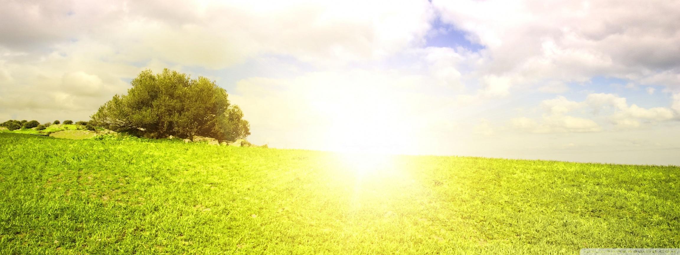Sunlight Wallpaper
