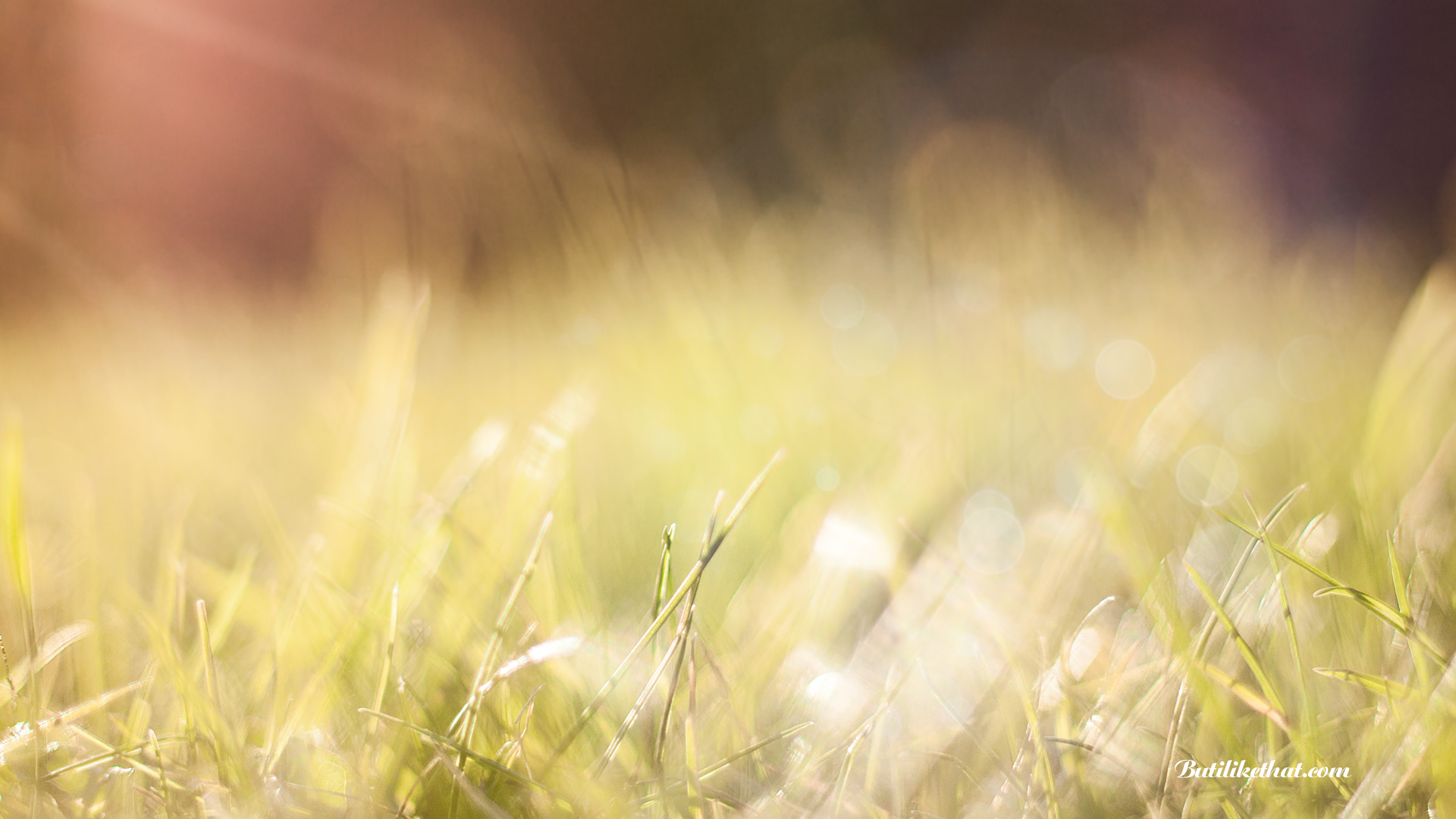 Sunlight Grass Wallpaper