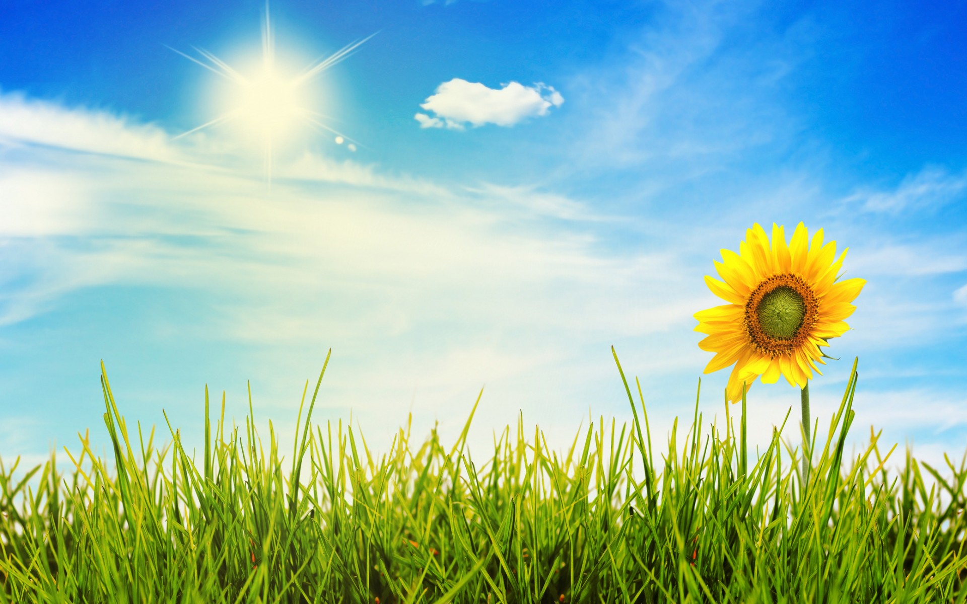 Free Sunny Day Wallpaper