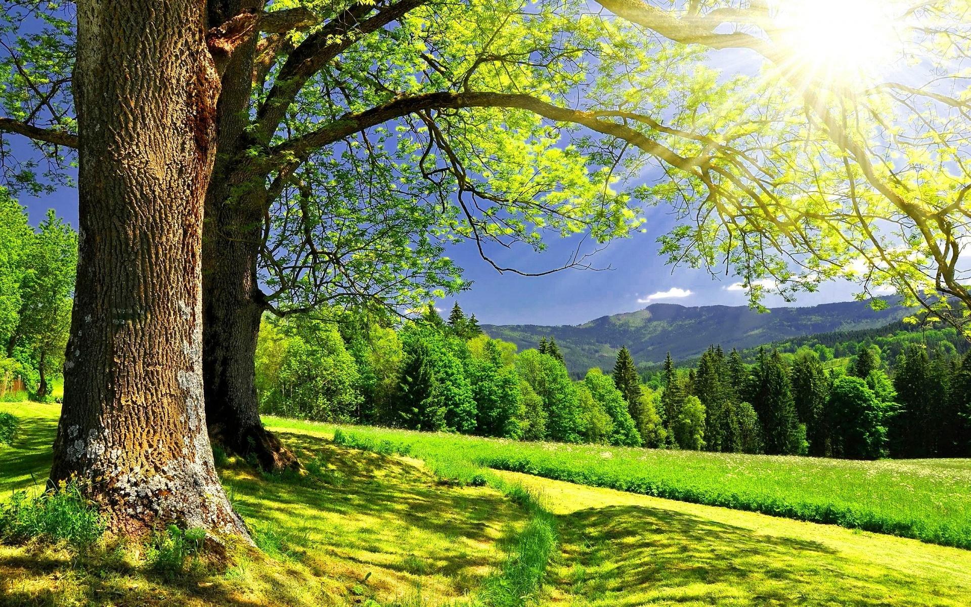 Sunny Day Wallpaper