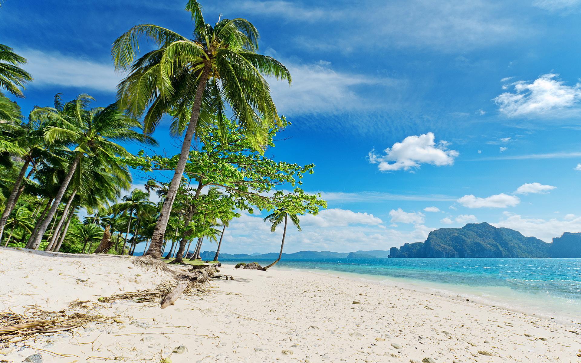 Sunny tropical beach palms