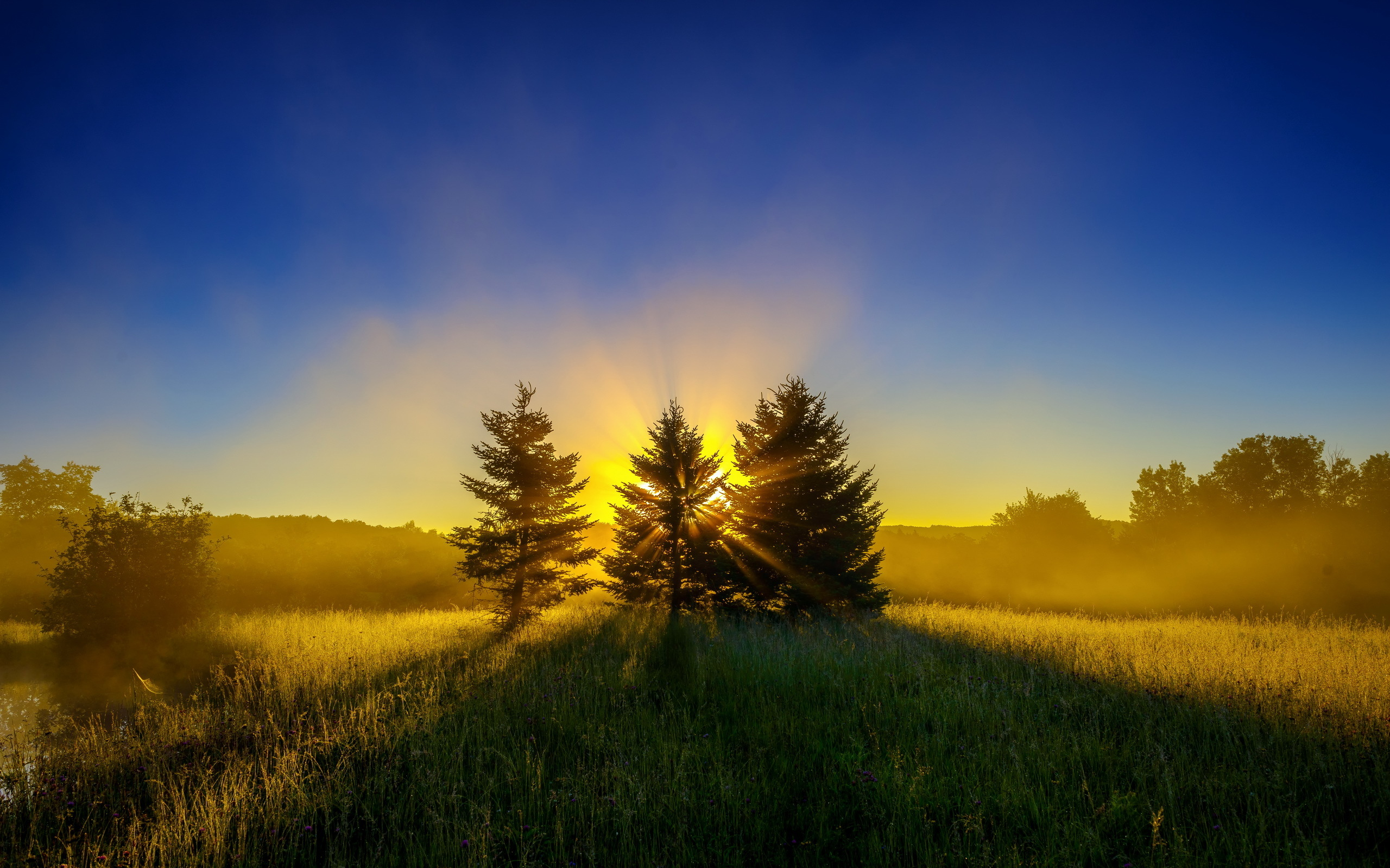 Sunrise Trees Wallpapers Pictures Photos Images. «