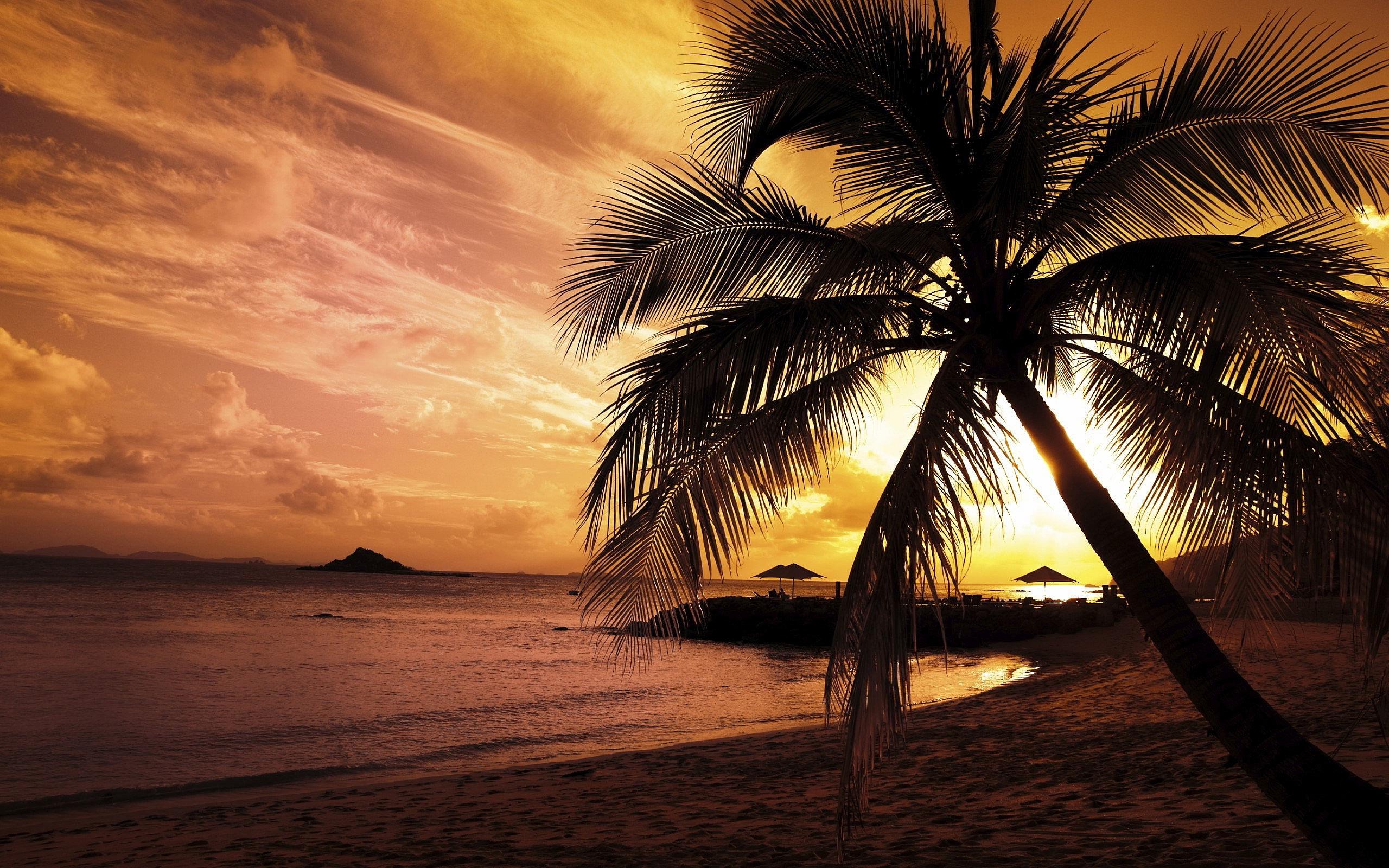 Sunset Beach Palm