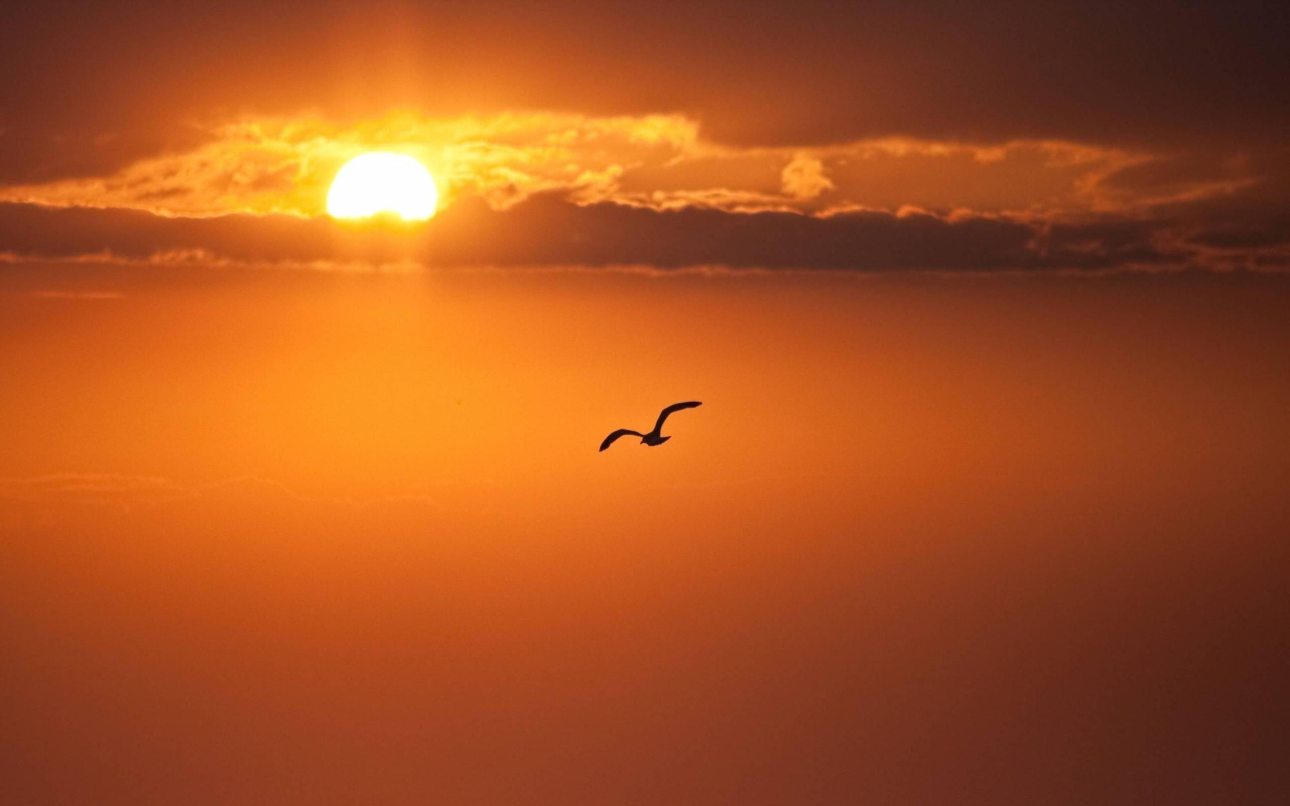 Bird Sunset Wallpaper