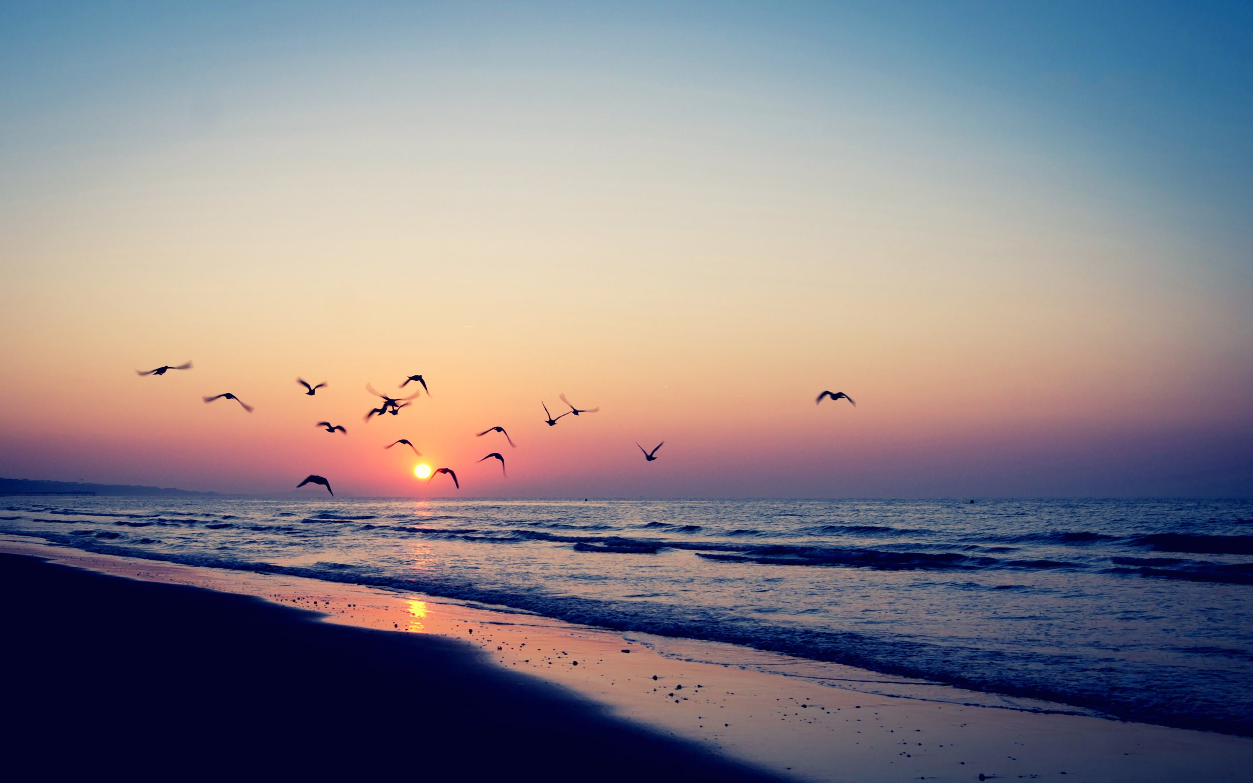 Sunset Birds Sea Beach HD Wallpaper